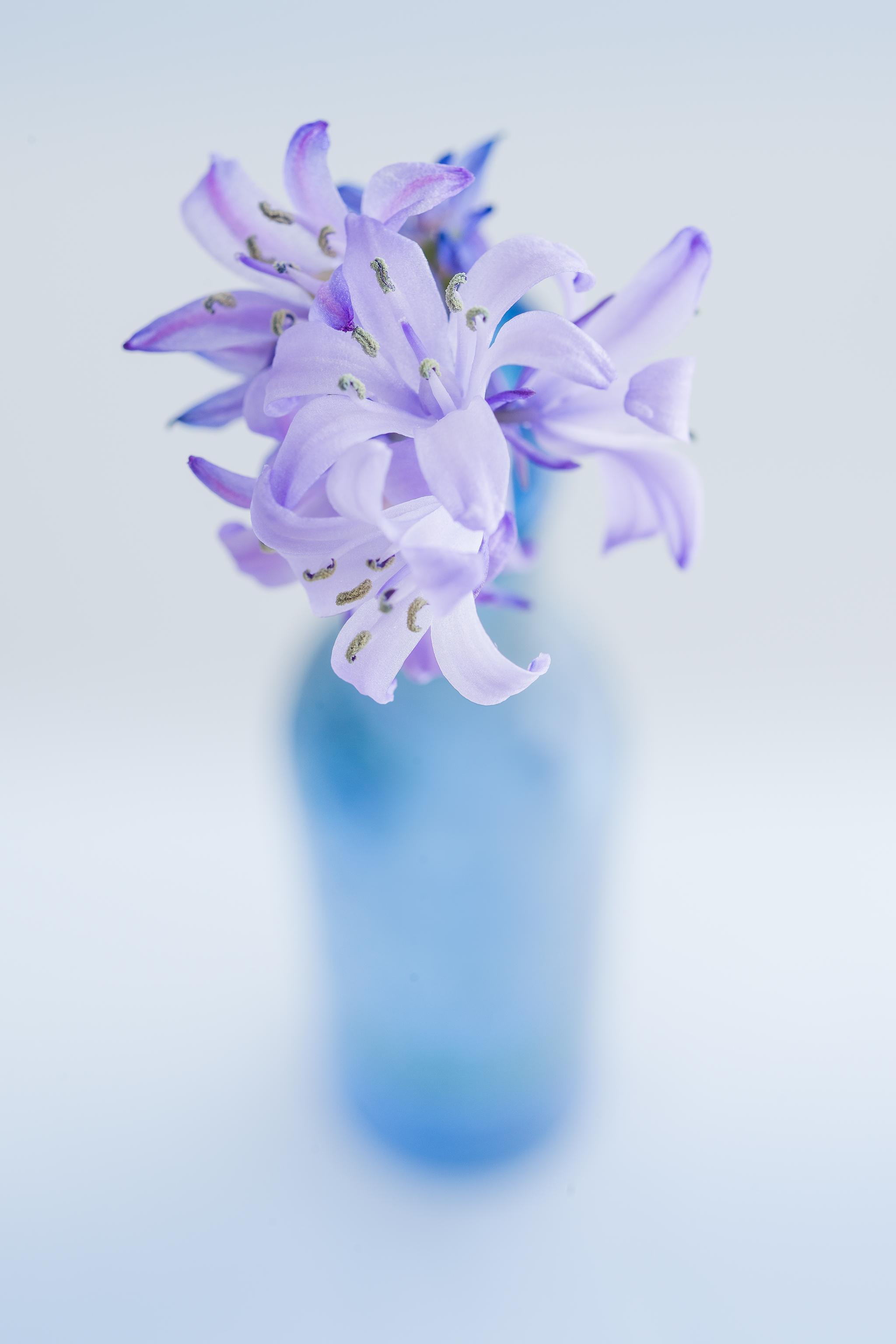 bluebell-for-web.jpg