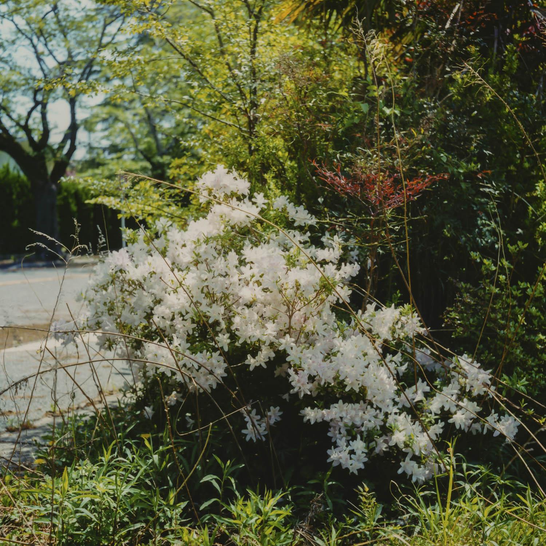 May. 4 , 2014 Yonomori Tomioka Fukusima Japan