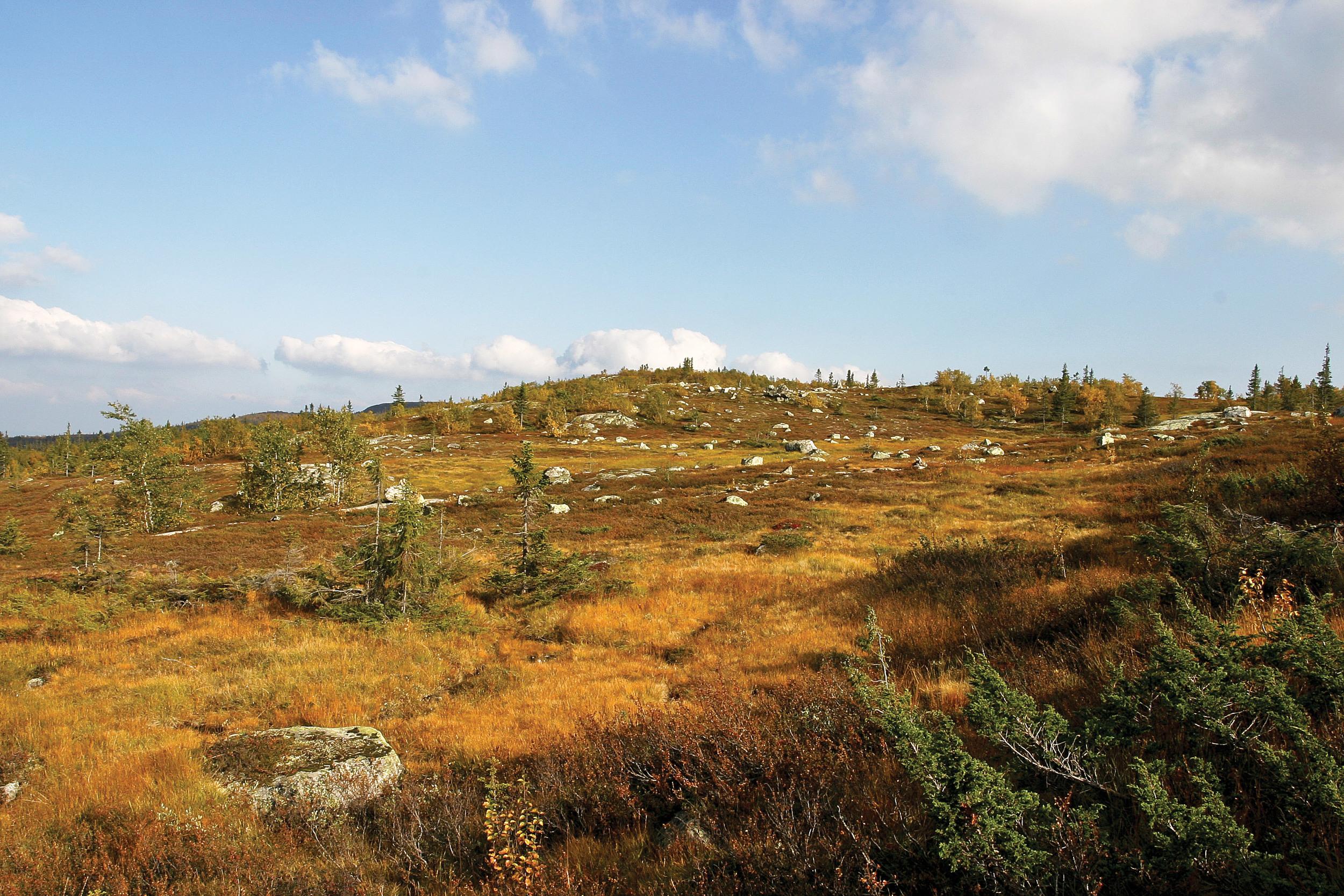 Annet tresatt areal er utmarksarealer med busk- eller trevegetasjon, men som ikke holder kravet til gjeldende definisjon av skog. Slike areal kan noen ganger ha vært regnet som skog, og andre ganger ikke. Hedalen, Sør-Aurdal. Foto: John Yngvar Larsson, NIBIO