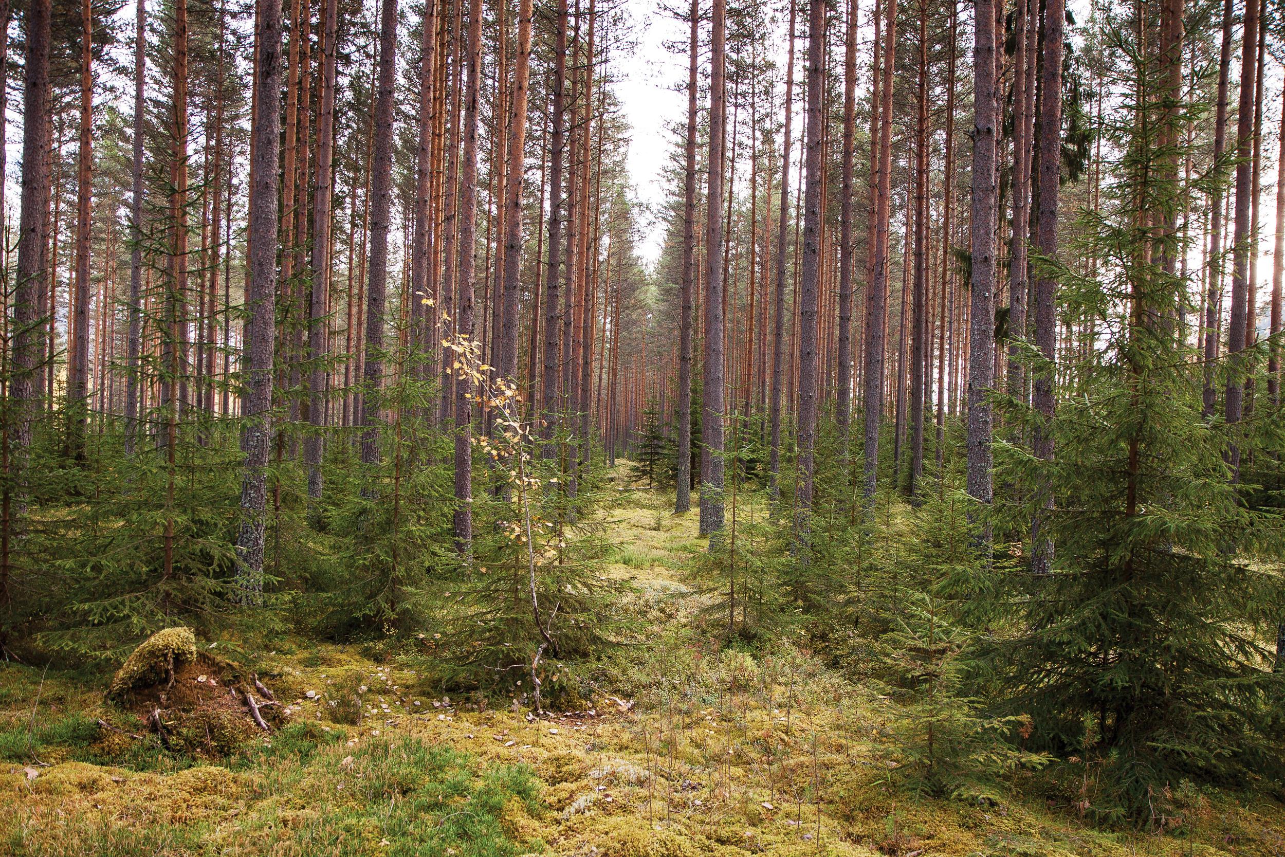 Mark der det kan produseres minst 1 kubikkmeter trevirke per hektar og år defineres som produktiv skog. Foto: John Yngvar Larsson, NIBIO