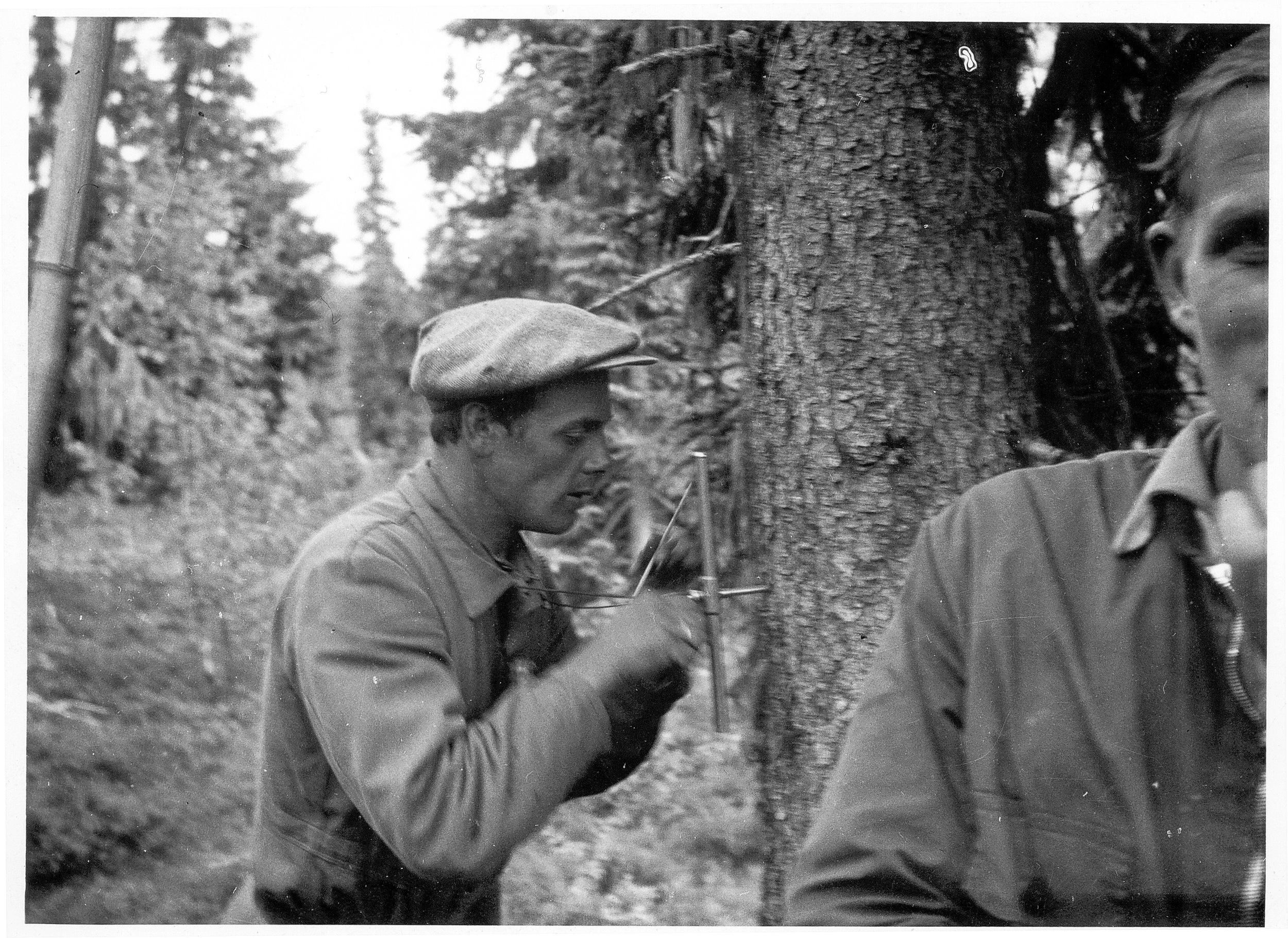 Uttak av borprøve for telling og måling av årringer. Ut fra dette bestemmes alderen til treet og hvor raskt det har vokst. Tilvekstboret er et sentralt redskap også i dagens takstarbeid. Foto utlånt av G.Vigerust