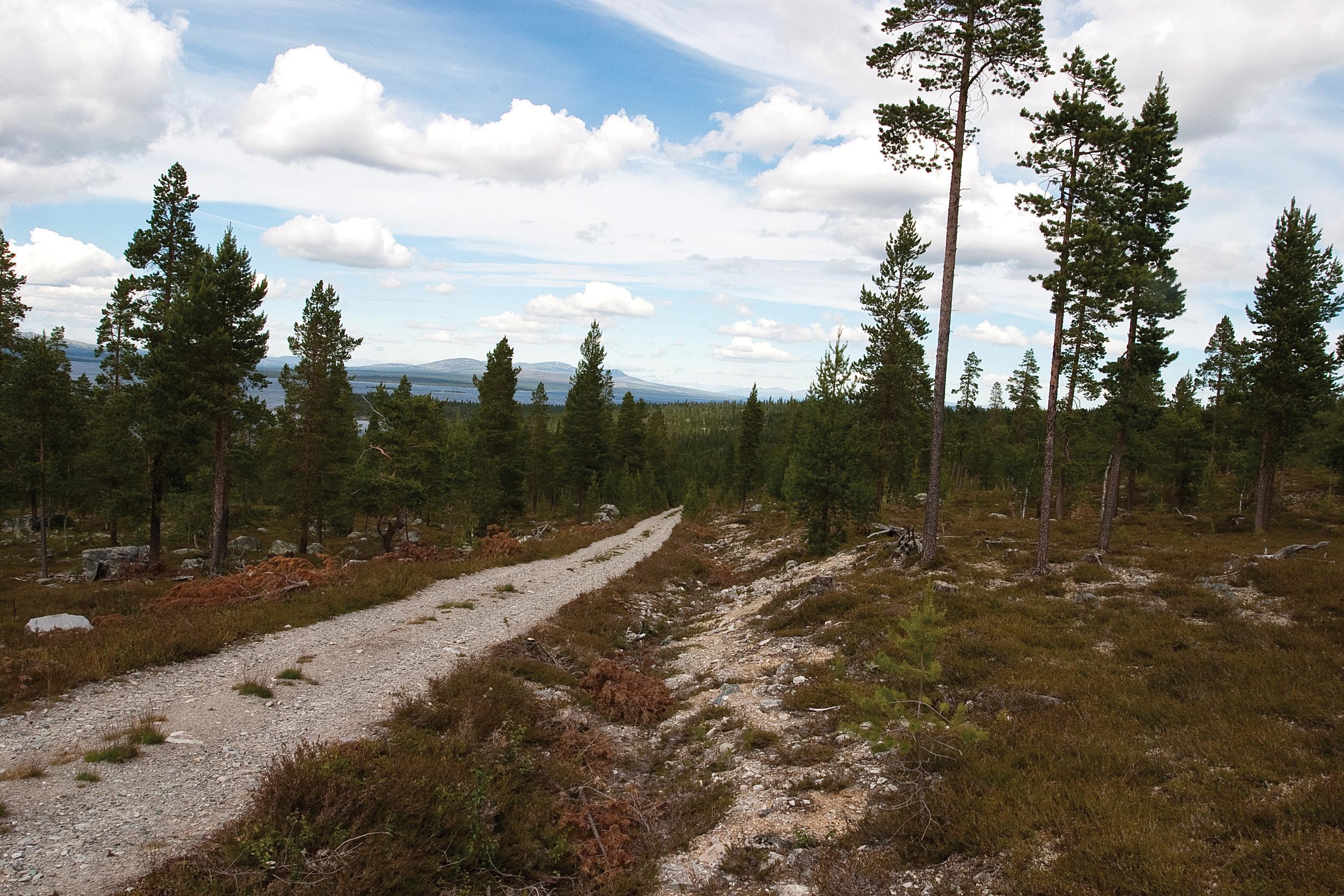 Det er cirka 50 000 km skogsbilveger i Norge. I skogstrøkene på Østlandet er det et godt utbygd nett av veger. Engerdal, Hedmark. Foto: John Yngvar Larsson, NIBIO