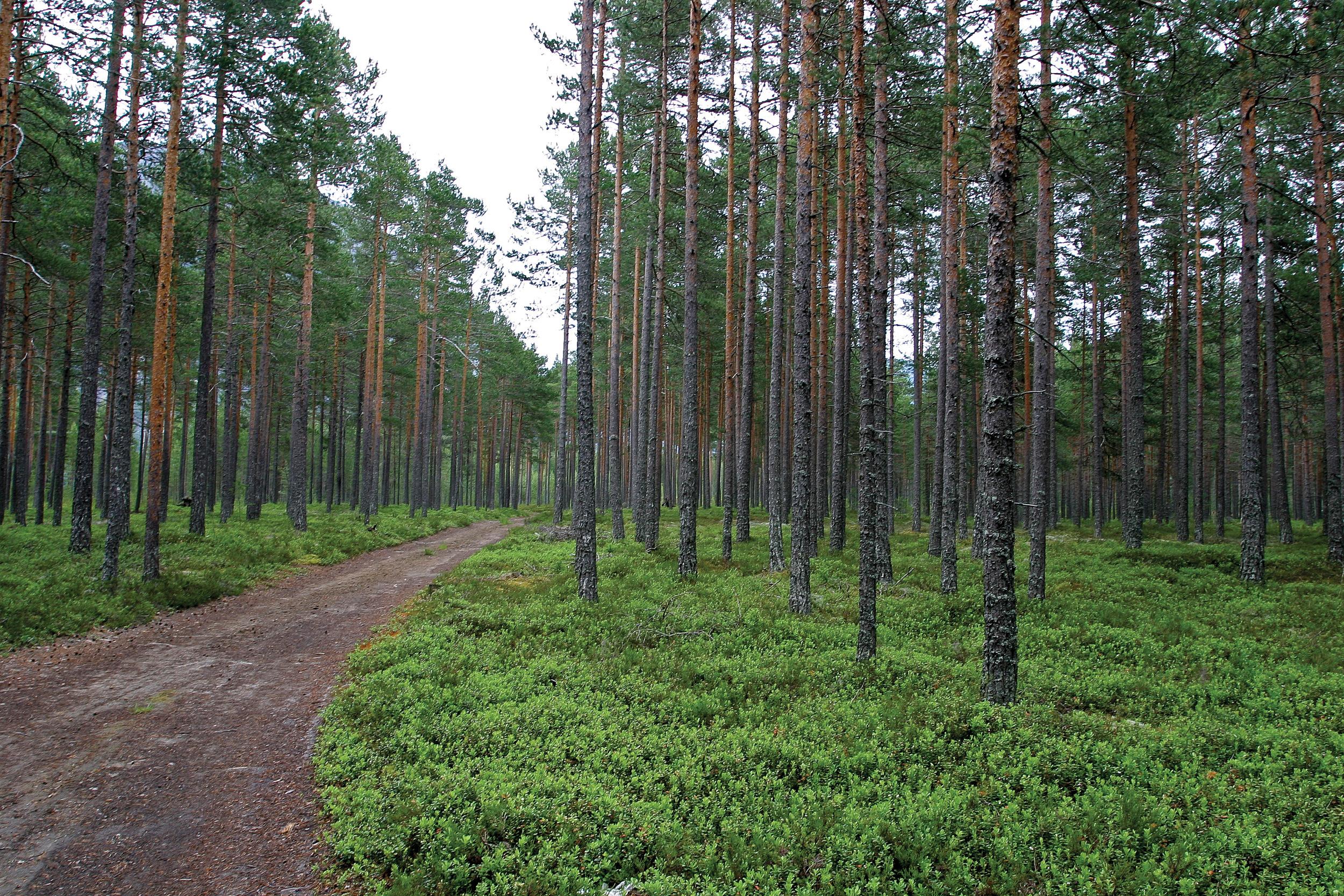 Skogsbilveger, traktorveger, landbruksveger, anleggsveger, seterveger og andre private veger med lengde over 50 meter, er definert som tyngre teknisk inngrep. Valle, Aust-Agder. Foto: John Yngvar Larsson,NIBIO