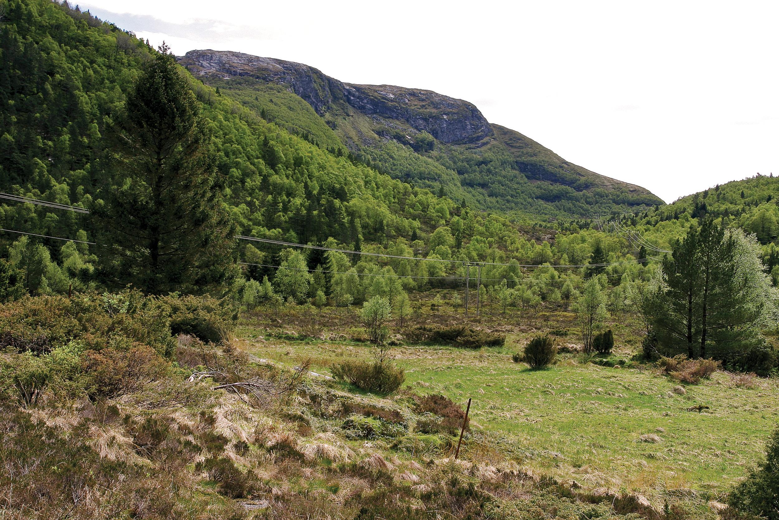 I Norge regnes ofte treslagsskifte, det vil si tilplanting av tidligere furuskog og lauvskog som skogreising. Skogreisingsmark i Gulen, Hordaland. Foto: John Yngvar Larsson, NIBIO