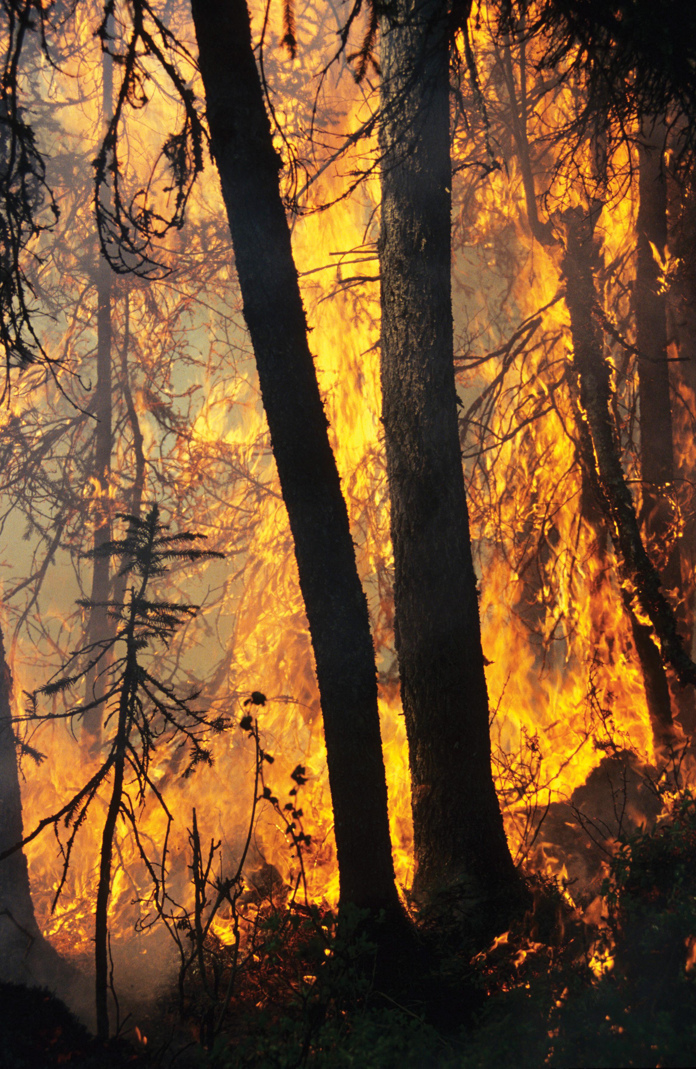 De aller fleste skogbranner skyldes menneskelig aktivitet, mens lynnedslag er den viktigste årsaken til naturlige skogbranner. Foto: Ken Olaf Storaunet,NIBIO