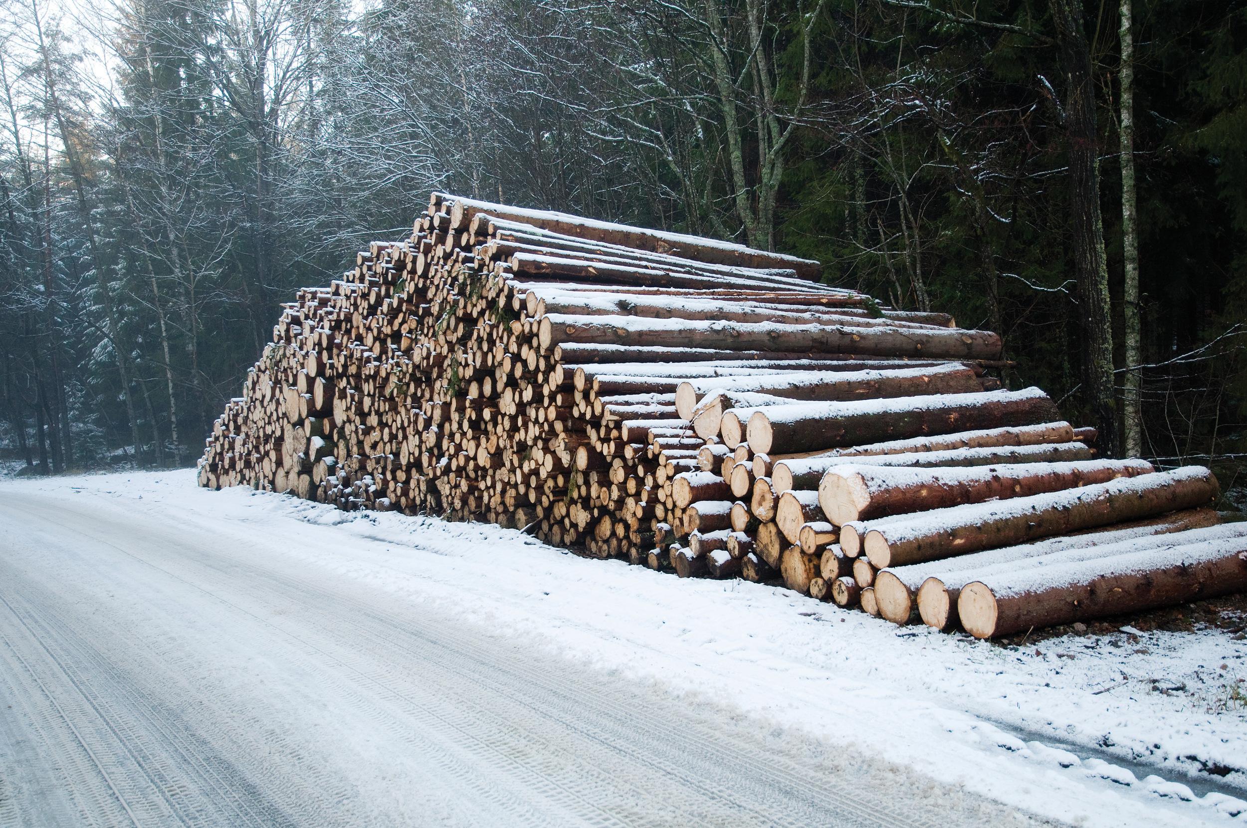 I 2015 ble det eksportert nesten fire millioner kubikkmeter tømmer, det høyeste registrerte tømmereksportkvantumet. Foto: Lars Sandved Dalen, NIBIO