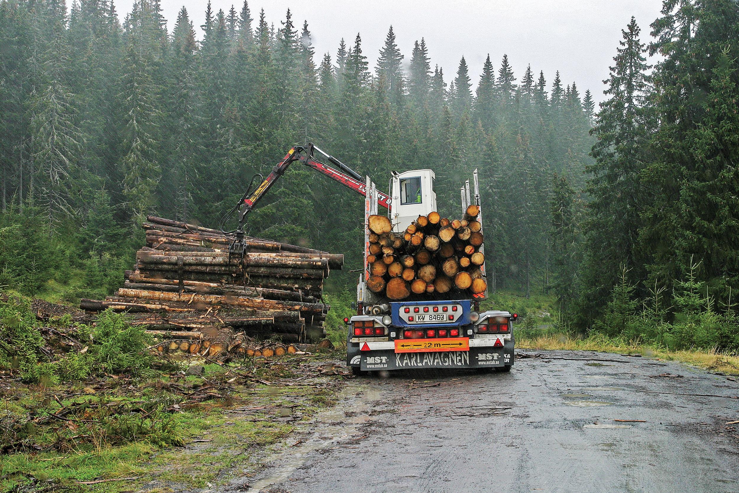 Utbygging av skogsvegnettet som muliggjorde tømmertransport på bil i stedet for fløting på elv, bidro til at sysselsettingen i skogbruket gikk ned. Mylla, Oppland. Foto: John Yngvar Larsson, NIBIO