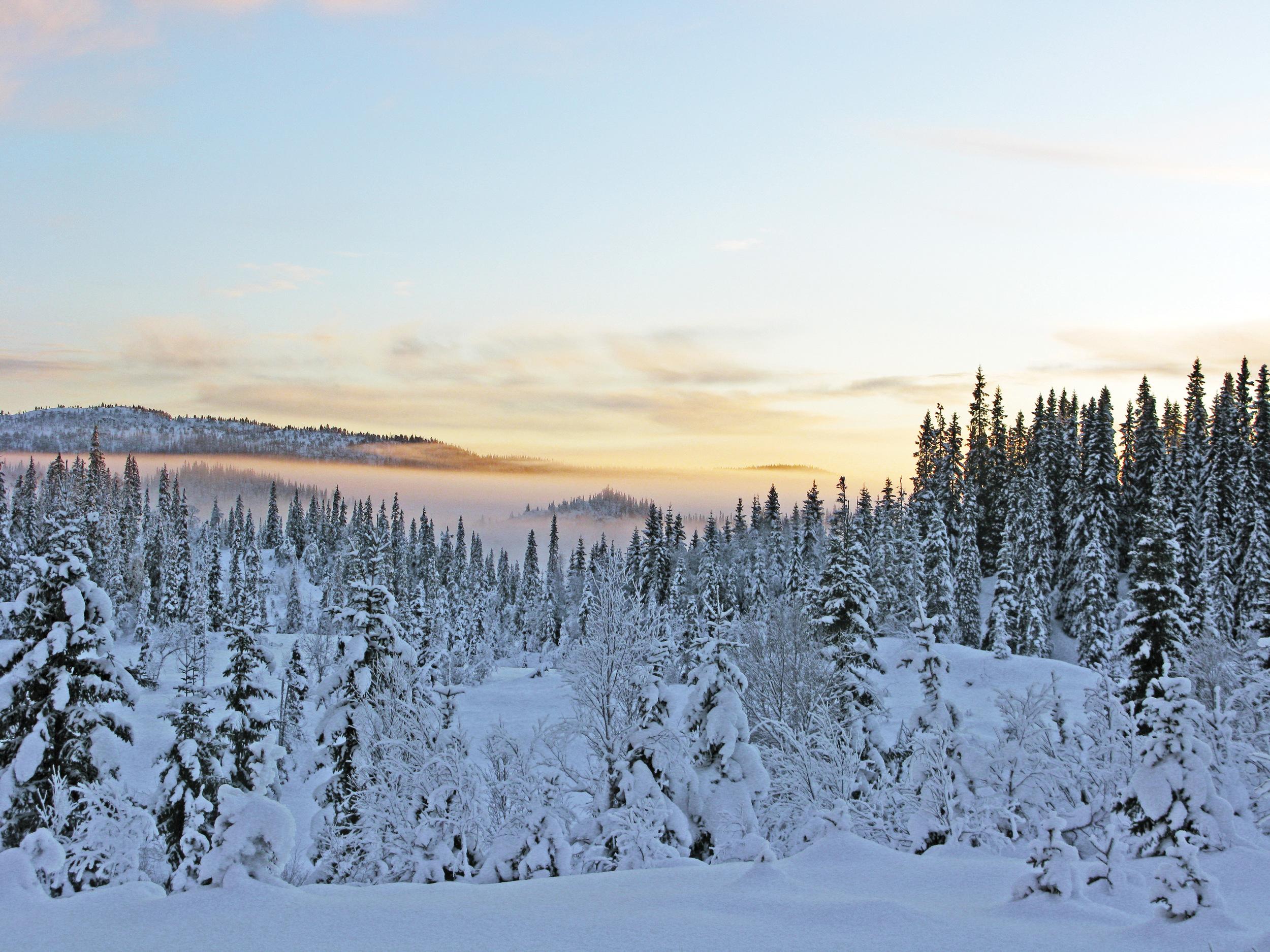 11 400 skogeiendommer eies av sameier. I gjennomsnitt har disse 2,9 eiere hver. Foto: Arne Steffenrem, NIBIO