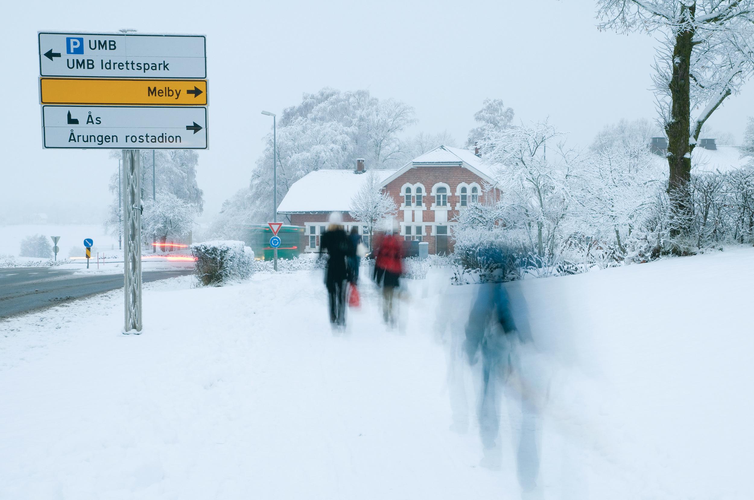 NMBU er Norges sentrale og ledende forsknings-og lærested for bioproduksjon, miljø og landskap. Foto: Lars Sandved Dalen, NIBIO