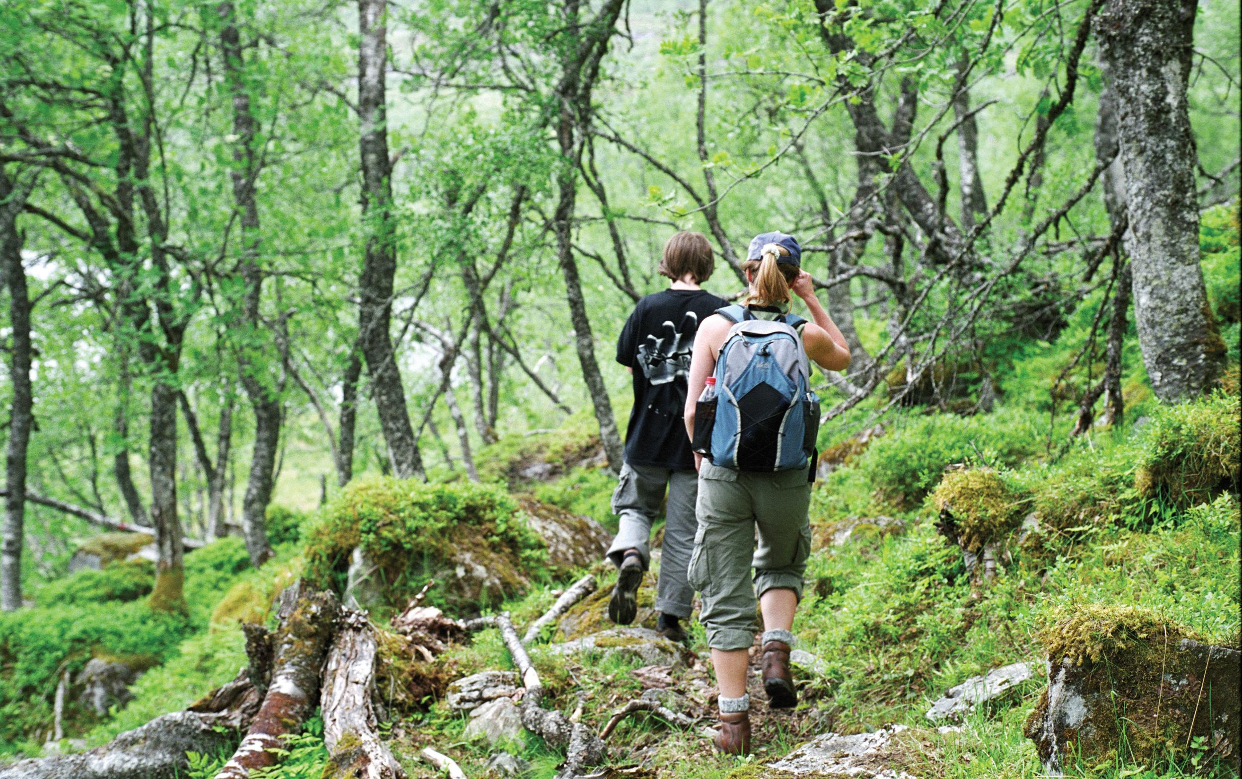 Fotturer er den vanligste aktiviteten knytta til skog. Naustdal, Sogn og Fjordane. Foto: Lars Sandved Dalen, NIBIO