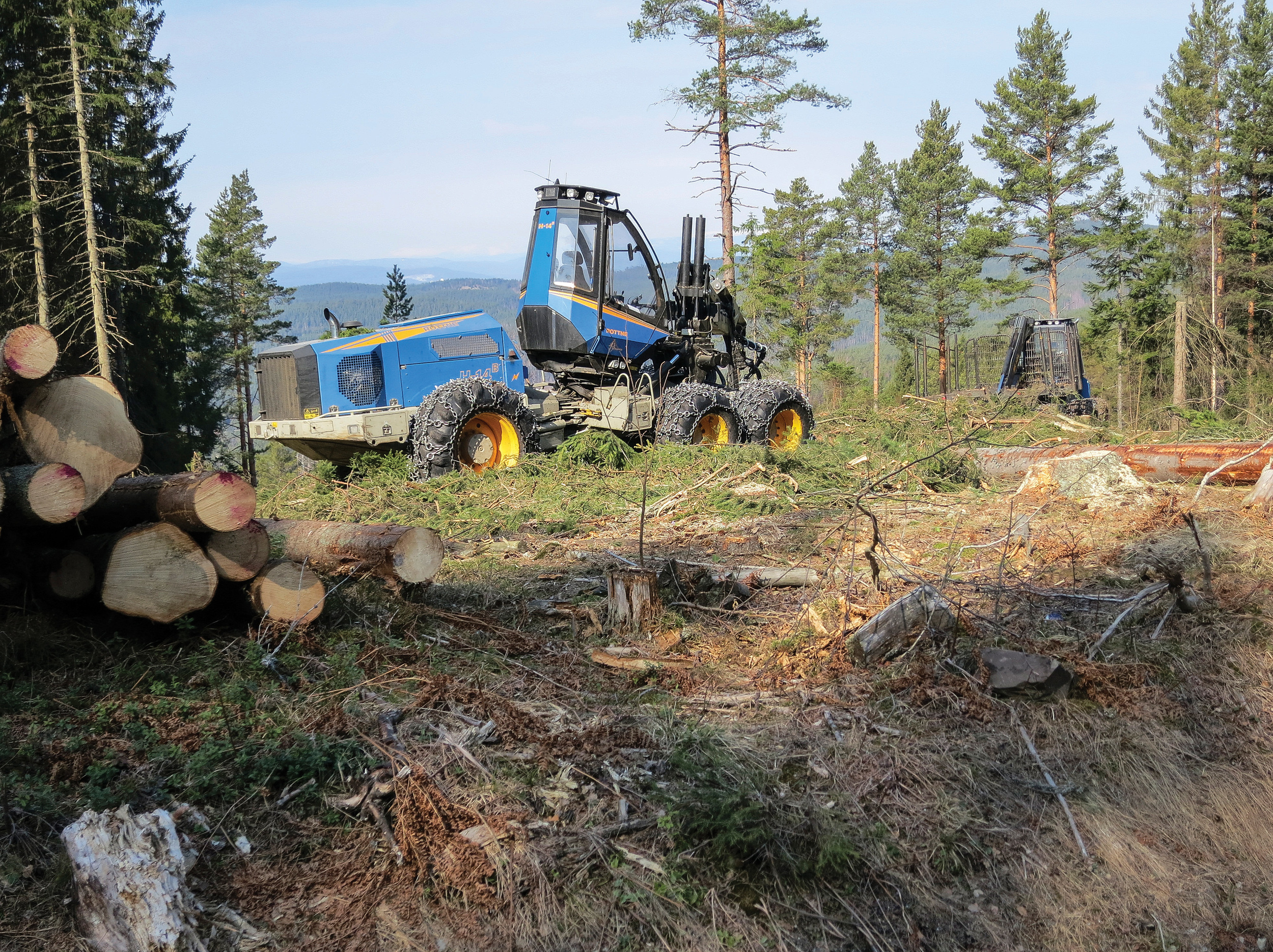 I 2016 ble det avvirket 10,35 millioner kubikkmeter industrivirke, det største volumet siden toppåret 1989-1990. Ringerike, Buskerud. Foto: John Yngvar Larsson, NIBIO