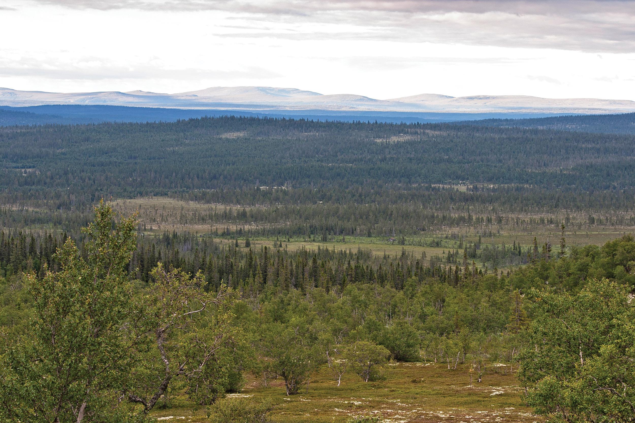 Skog og annet trebevokst areal dekker 44 prosent av landarealet i Norge. Hedmark er det største skogfylket med 1,7 millioner hektar eller 87 dekar skog per innbygger. Drevsjø, Hedmark. Foto: John Yngvar Larsson, NIBIO