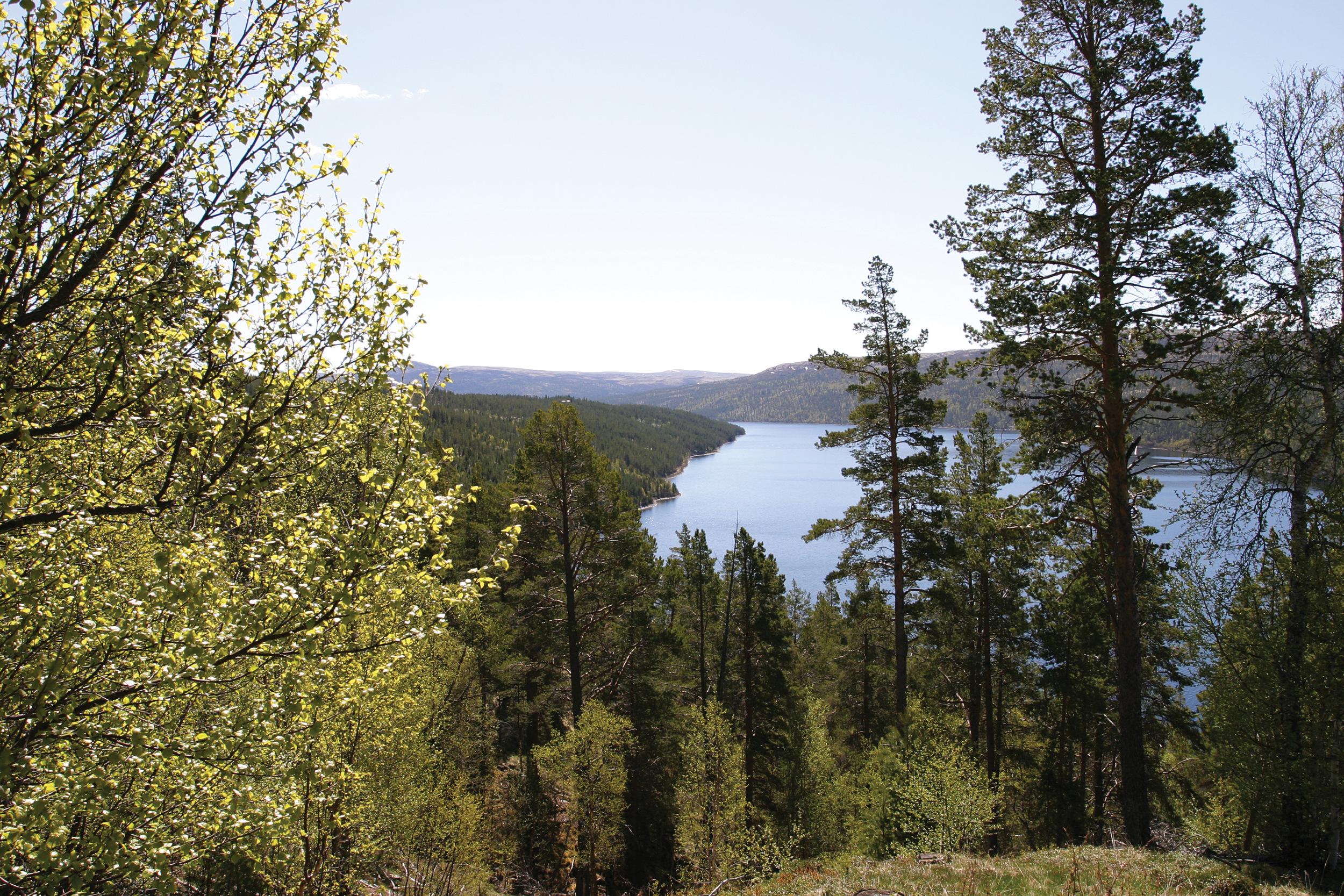 Tømmerressursene i skogen er betinget fornybare så lenge man også sørger for at ny skog kommer opp etter hogst. Foto: John Yngvar Larsson, NIBIO