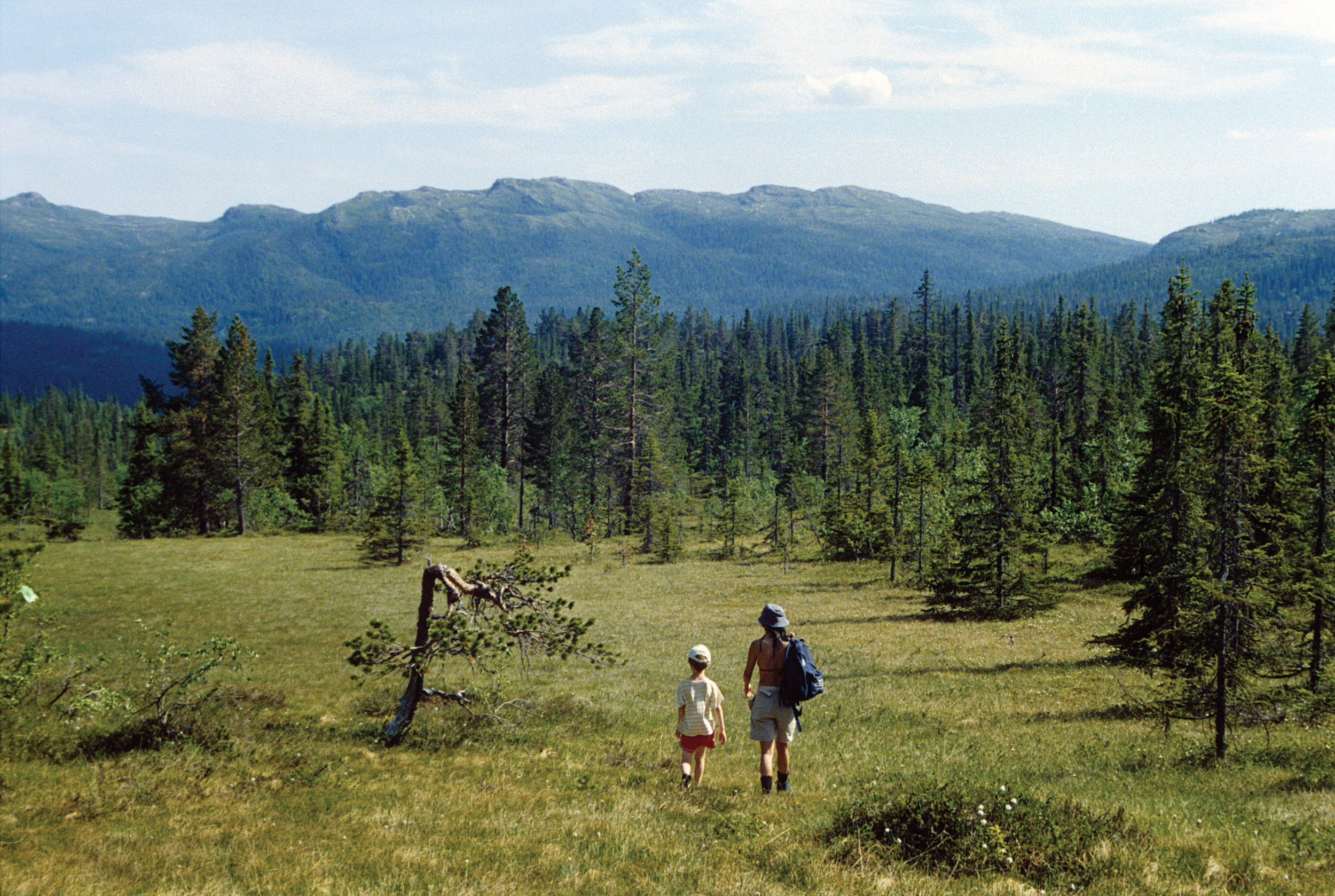 Allmennheten kan ferdes fritt i skog og mark hele året. Foto: John Yngvar Larsson, NIBIO