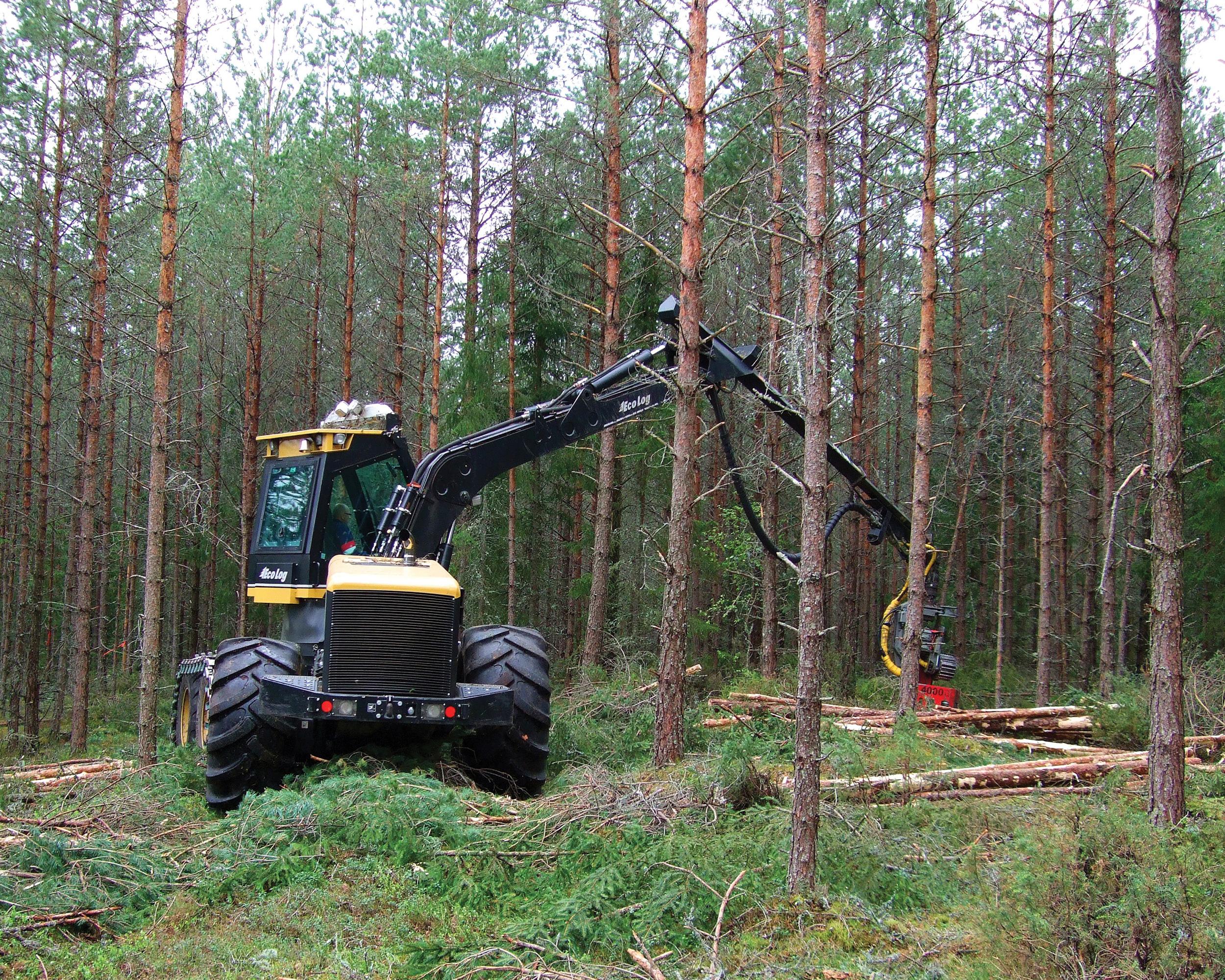 Norsk PEFC Skogstandard blir benyttet som et viktig grunnlag for skogsertifisering i Norge. Standarden har 27 kravpunkter som til sammen dekker områder og tiltak som har miljøpåvirkning eller er av betydning ved utøvelse av skogbruk. Maskinell tynning i furuskog. Foto: Gunnhild Søgaard, NIBIO