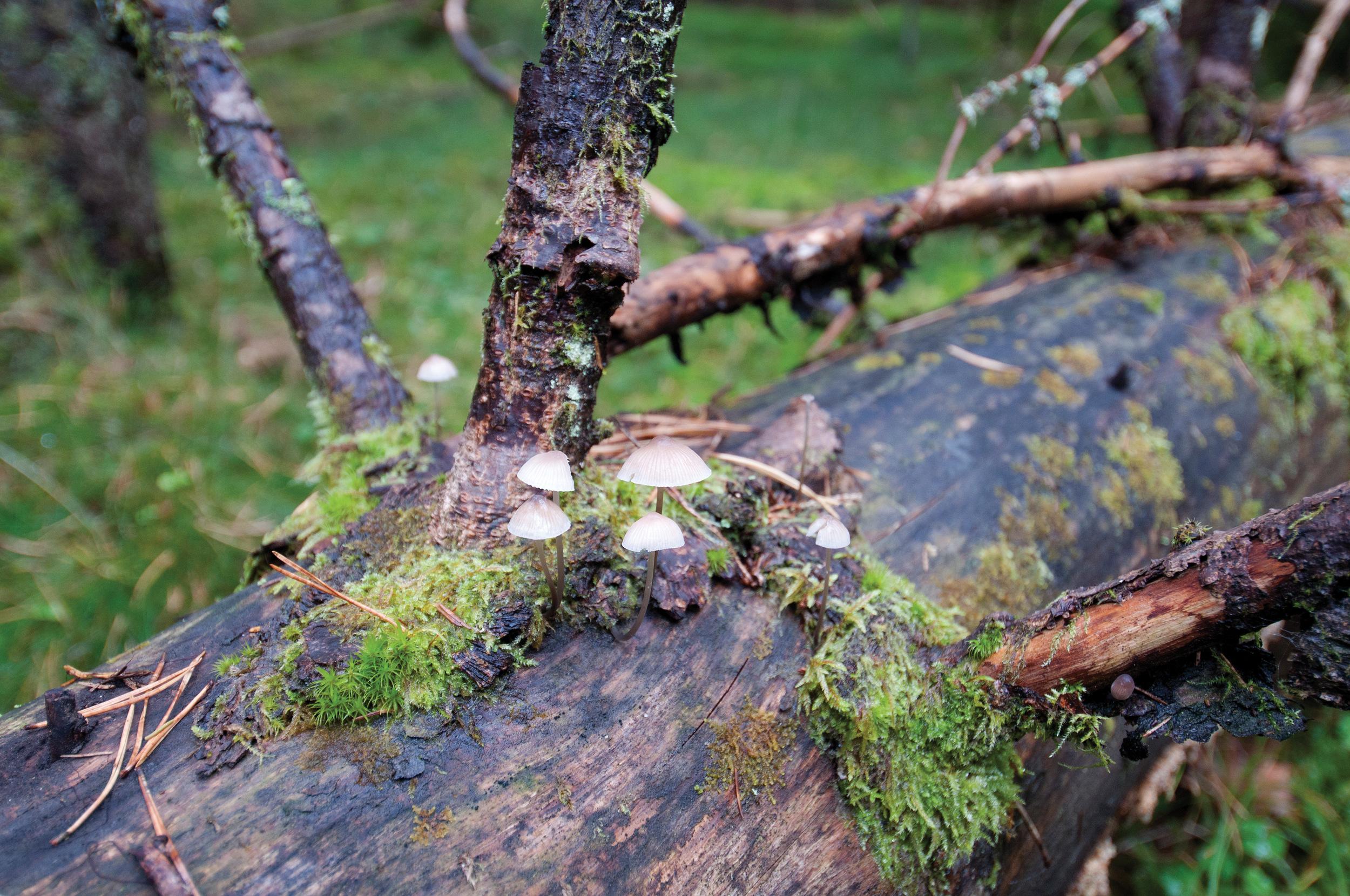 Naturindeksen for skog i 2015 viste en svak oppgang siden 1990, men ligger fortsatt på en relativt lav verdi. Det var særlig indikatorer for død ved og gamle trær, samt store rovdyr og nedbrytere som bidro til den lave indeksverdien, mens indikatorene for mengde død ved, hjortedyr, og blåbær bidro til den positive trenden.Utviklingen over tid illustrerer godt at endringer og dynamikken i skogen skjer langsomt. Nesodden, Akershus. Foto: Lars Sandved Dalen, NIBIO