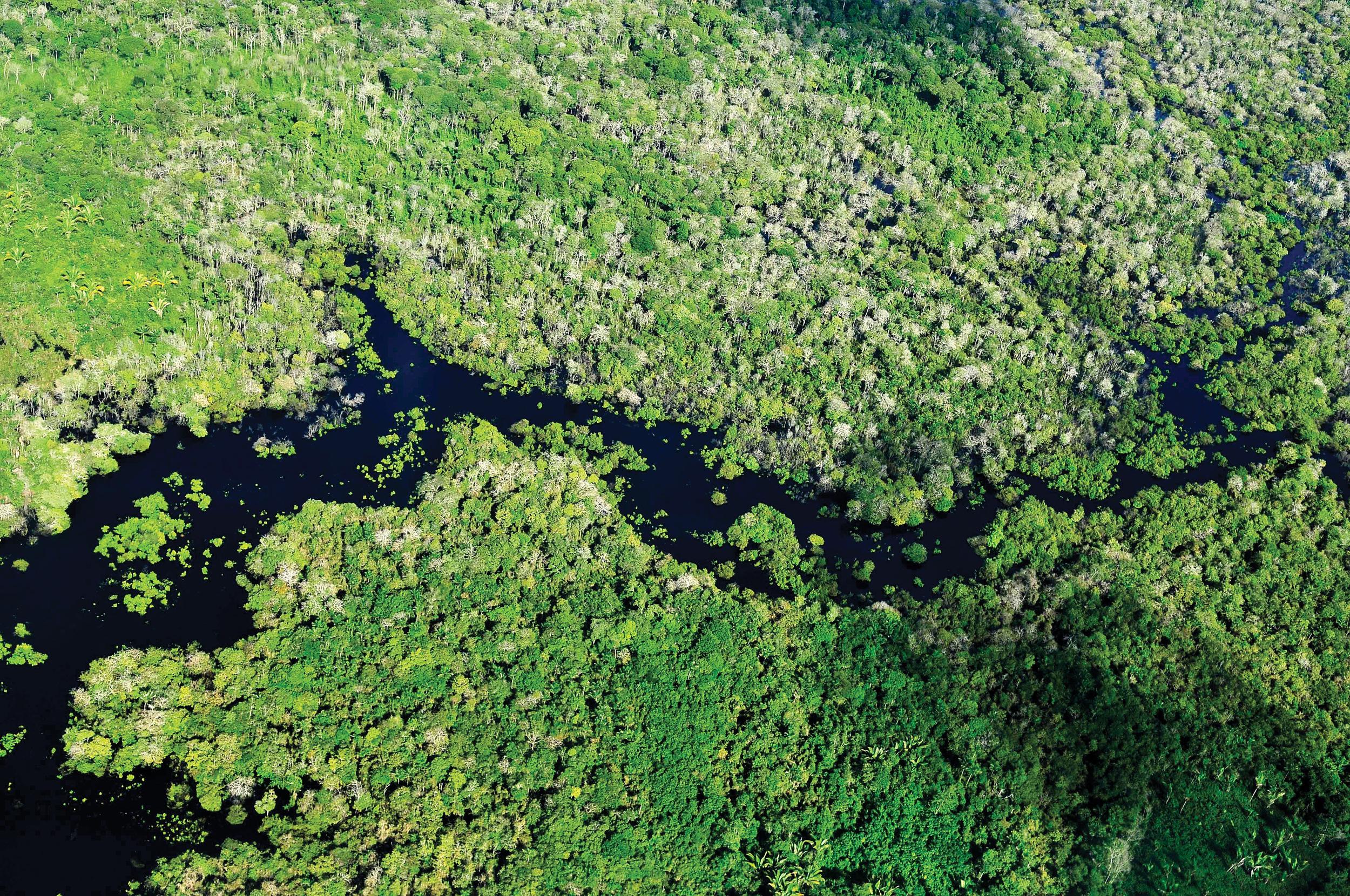 Hovedmotivasjonen for det globale skogpolitiske samarbeidet har vært å bekjempe avskogingen i tropiske strøk. Bildet er fra verdens største regnskog, Amazonas. Foto: Neil Palmer, CIAT