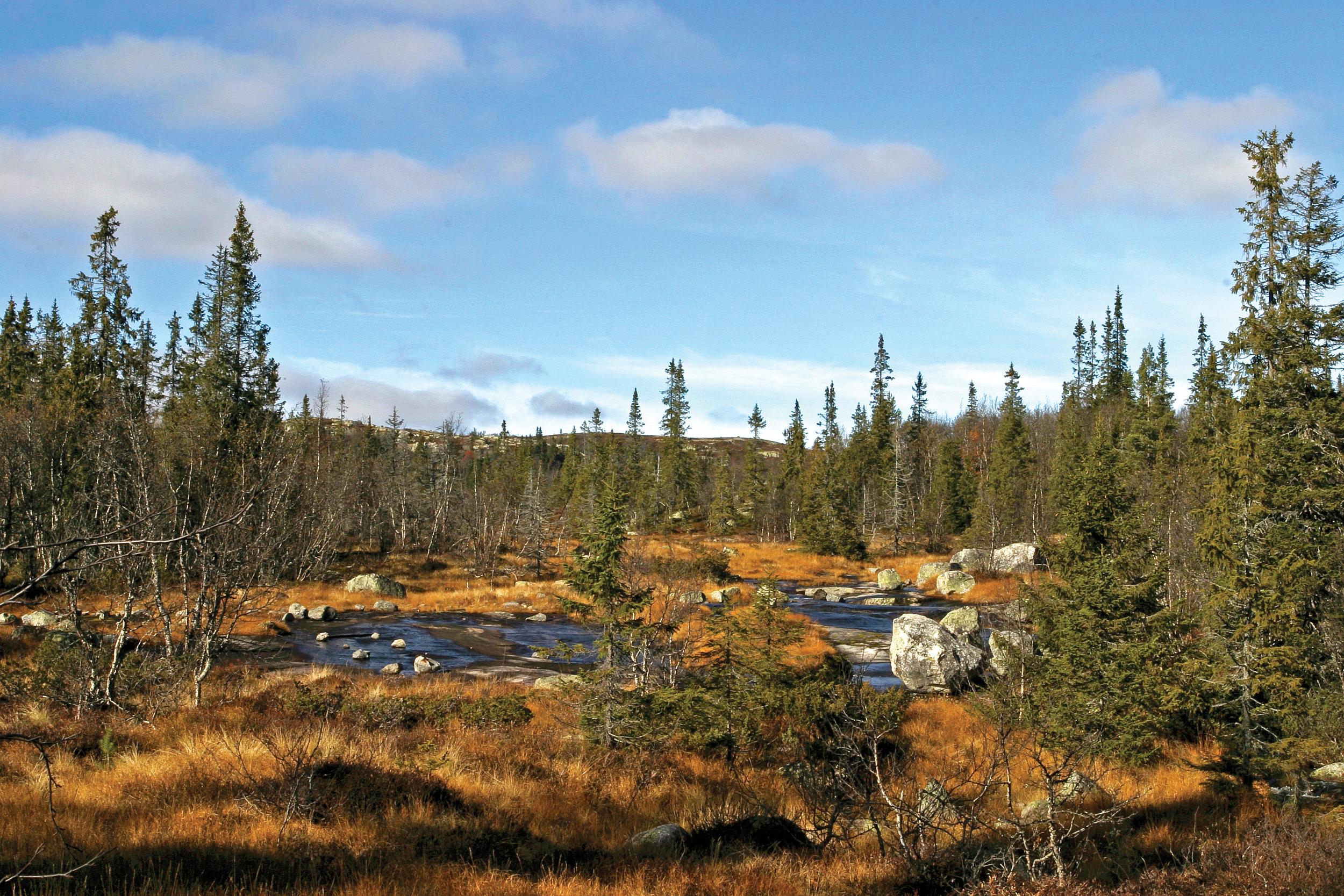Vernskog er skog som tjener til vern for annen skog eller som vern mot naturskader. Foto: John Yngvar Larsson, NIBIO
