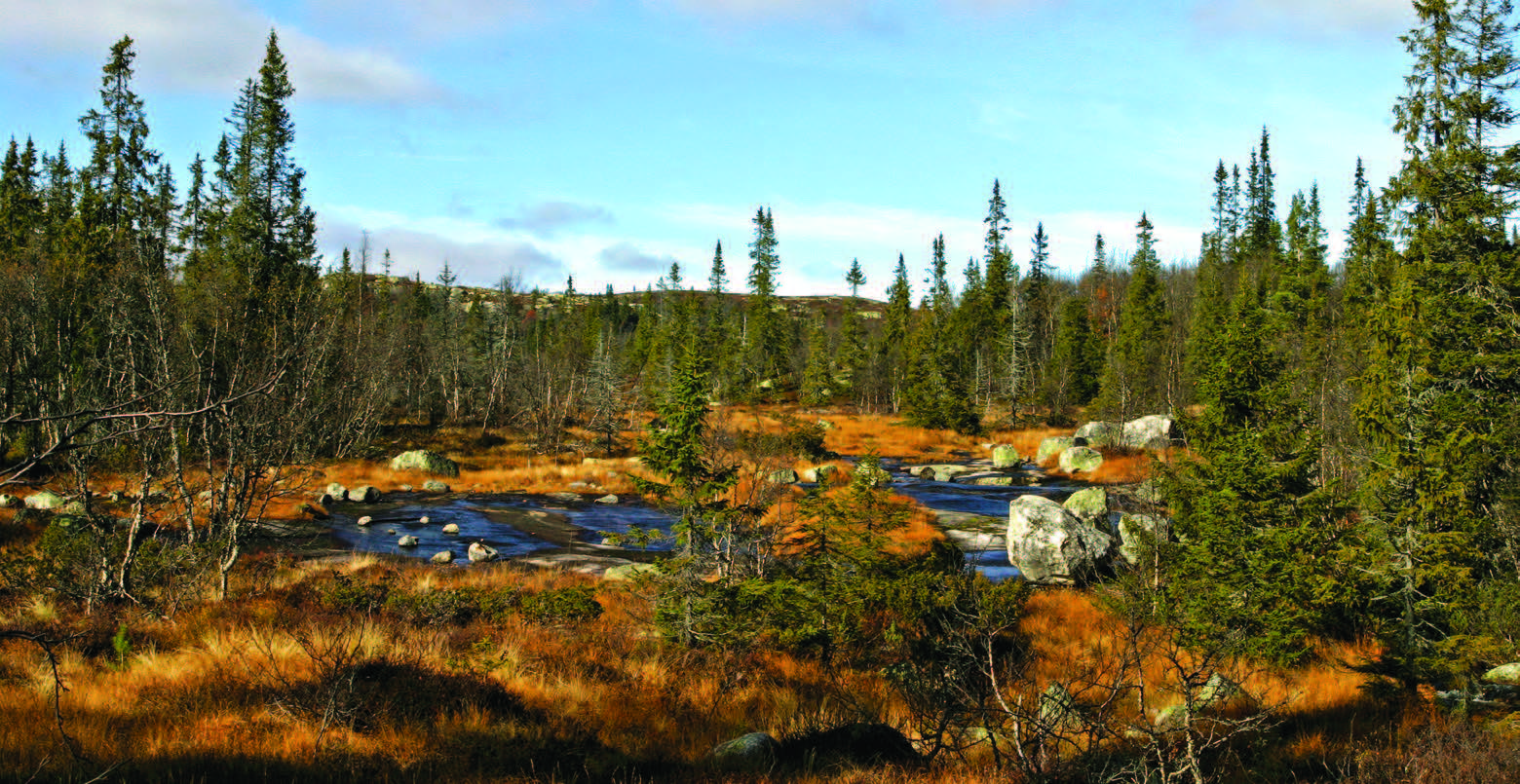 Vernskog tjener til vern for annen skog. Skog opp mot fjellet er sårbar og vernskogen skal forvaltes slik at skoggrensa stabiliseres. Hedalen, Oppland. Foto: John Yngvar Larsson, NIBIO