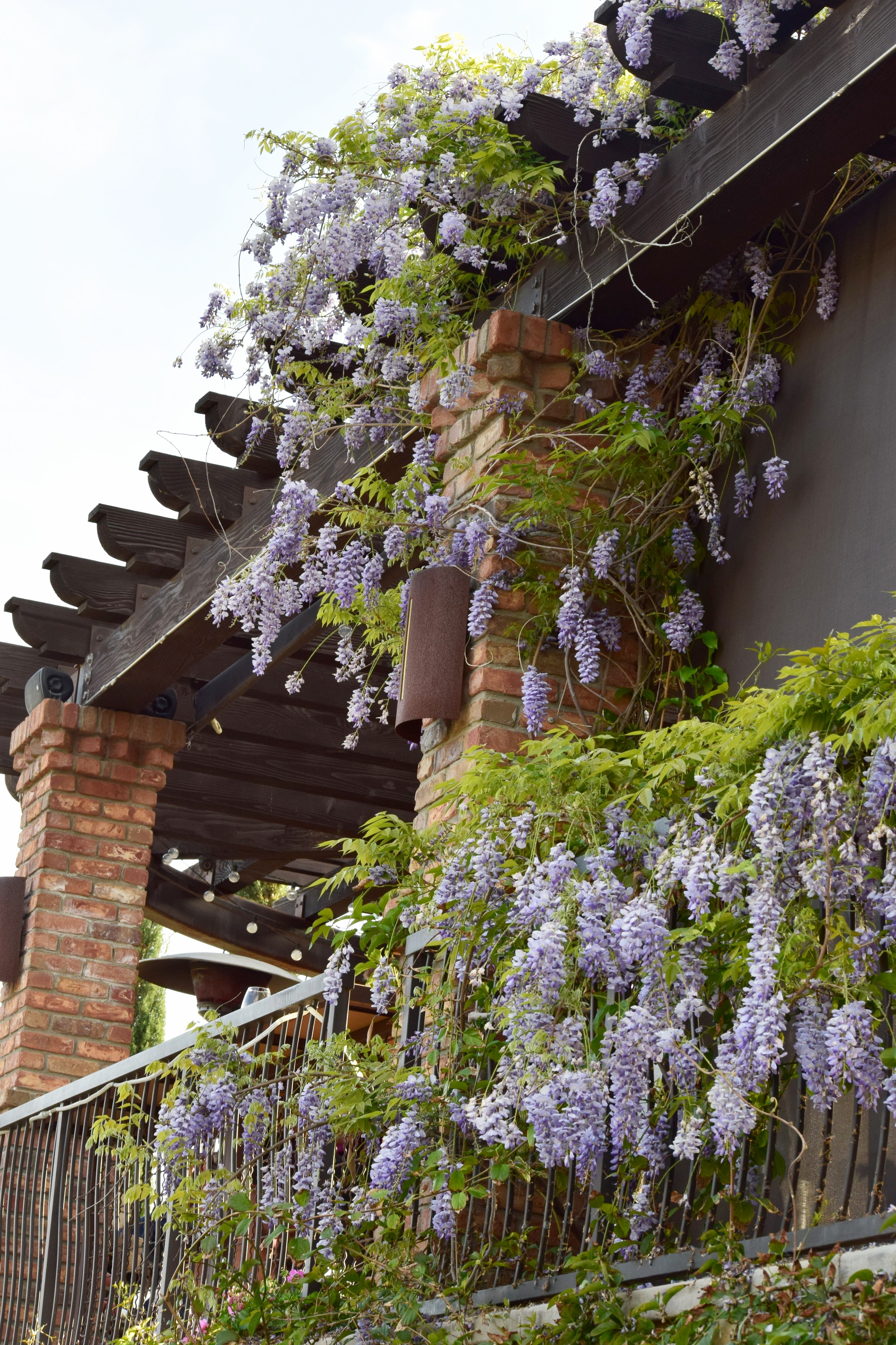 With Love Paper and Wine   Miramonte Winery   Wisteria Tree