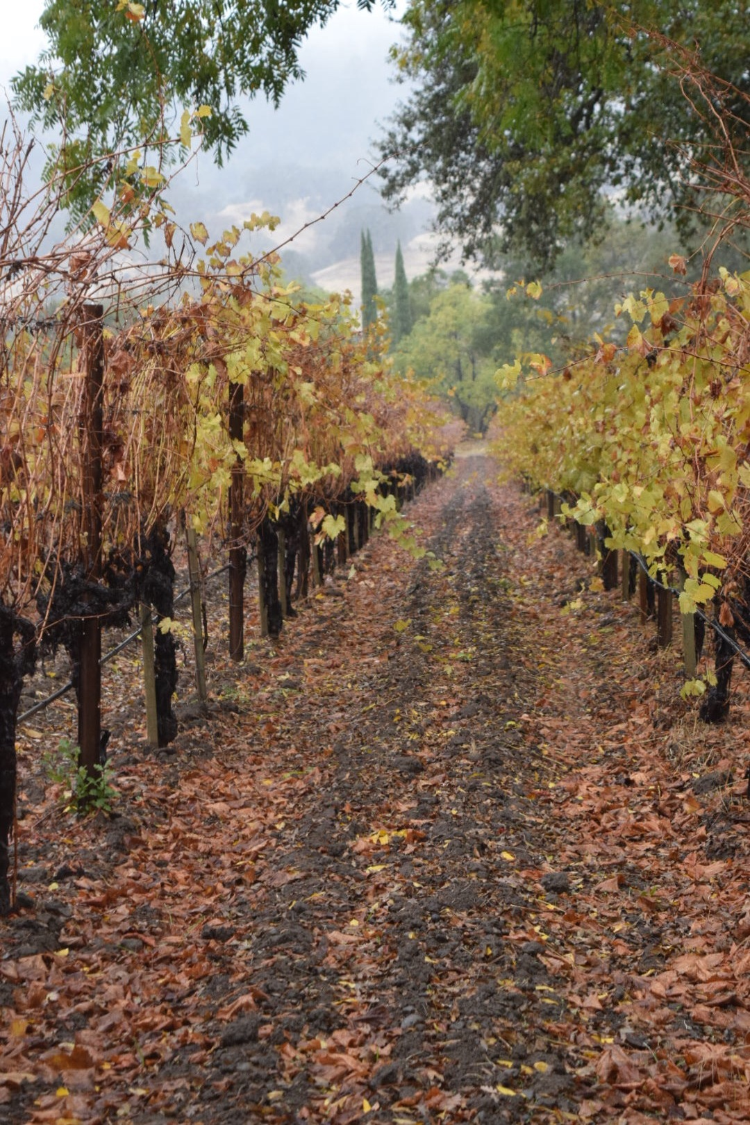 Fetzer- Bonterra Vineyards | Mendocino County