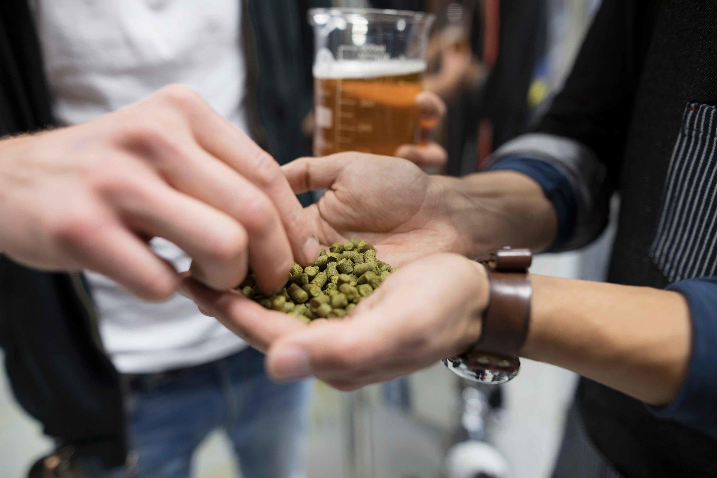 High Line Brewing hops