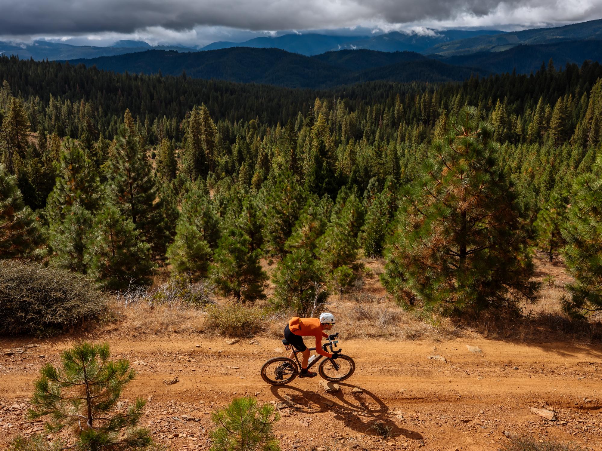 Gravel Bike Quincy California Pine Trees Rolling Hills