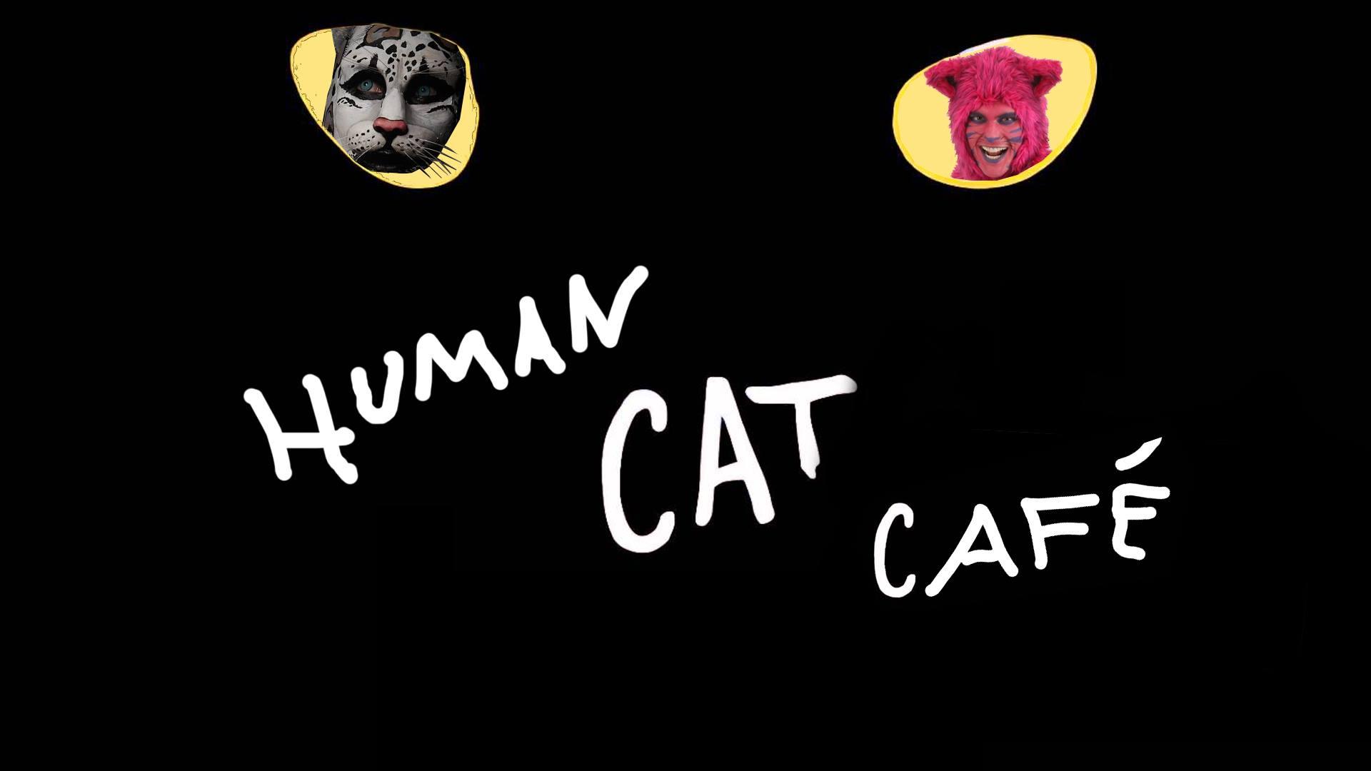 cat-cafe-toronto