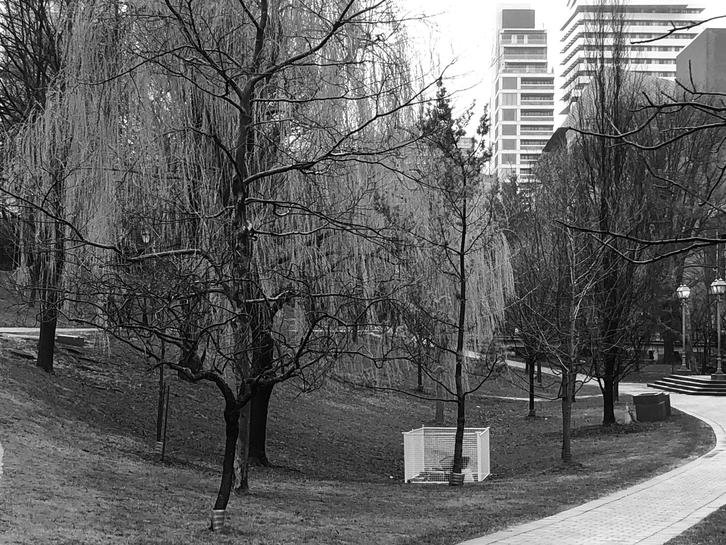 Queens-Park.jpg
