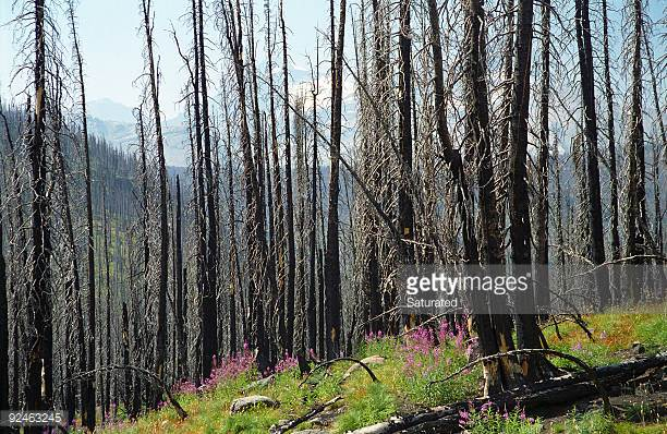 [Photo by Saturated/iStock / Getty Images] Post-Fire Regrowth Near Gorge Trail