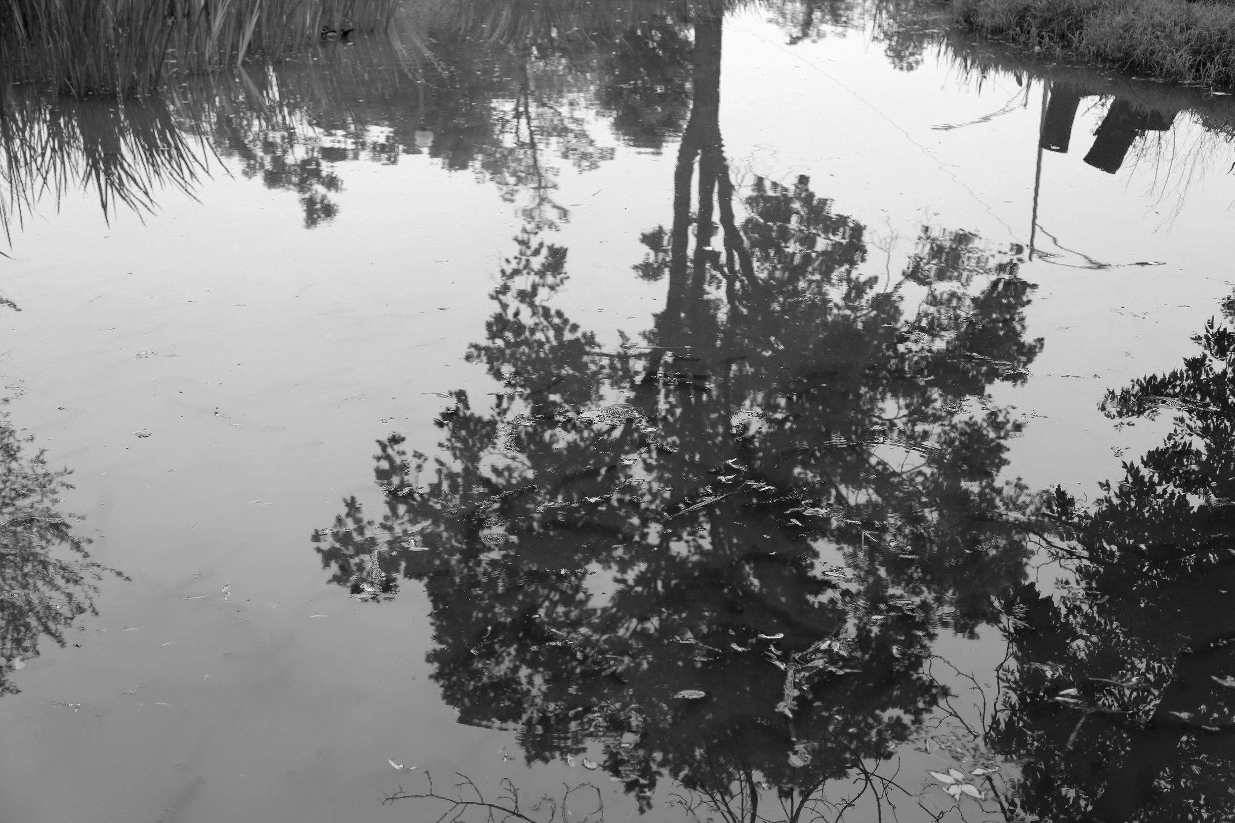 lagoon3.jpg