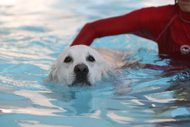 water exercise.jpg
