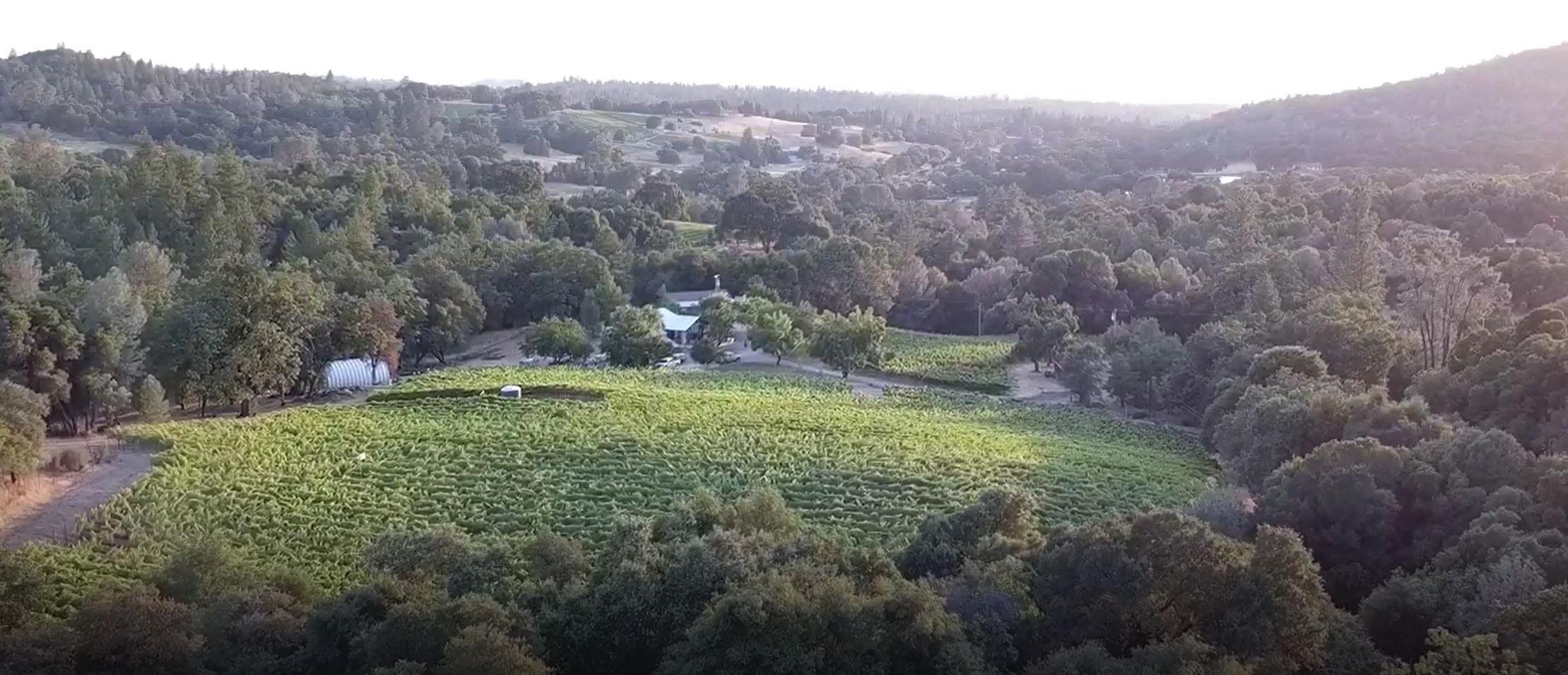 VineyardDrone.JPG