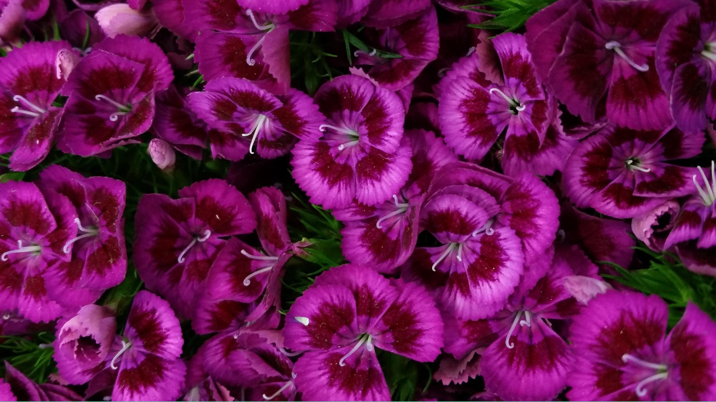 purple_pink.jpg