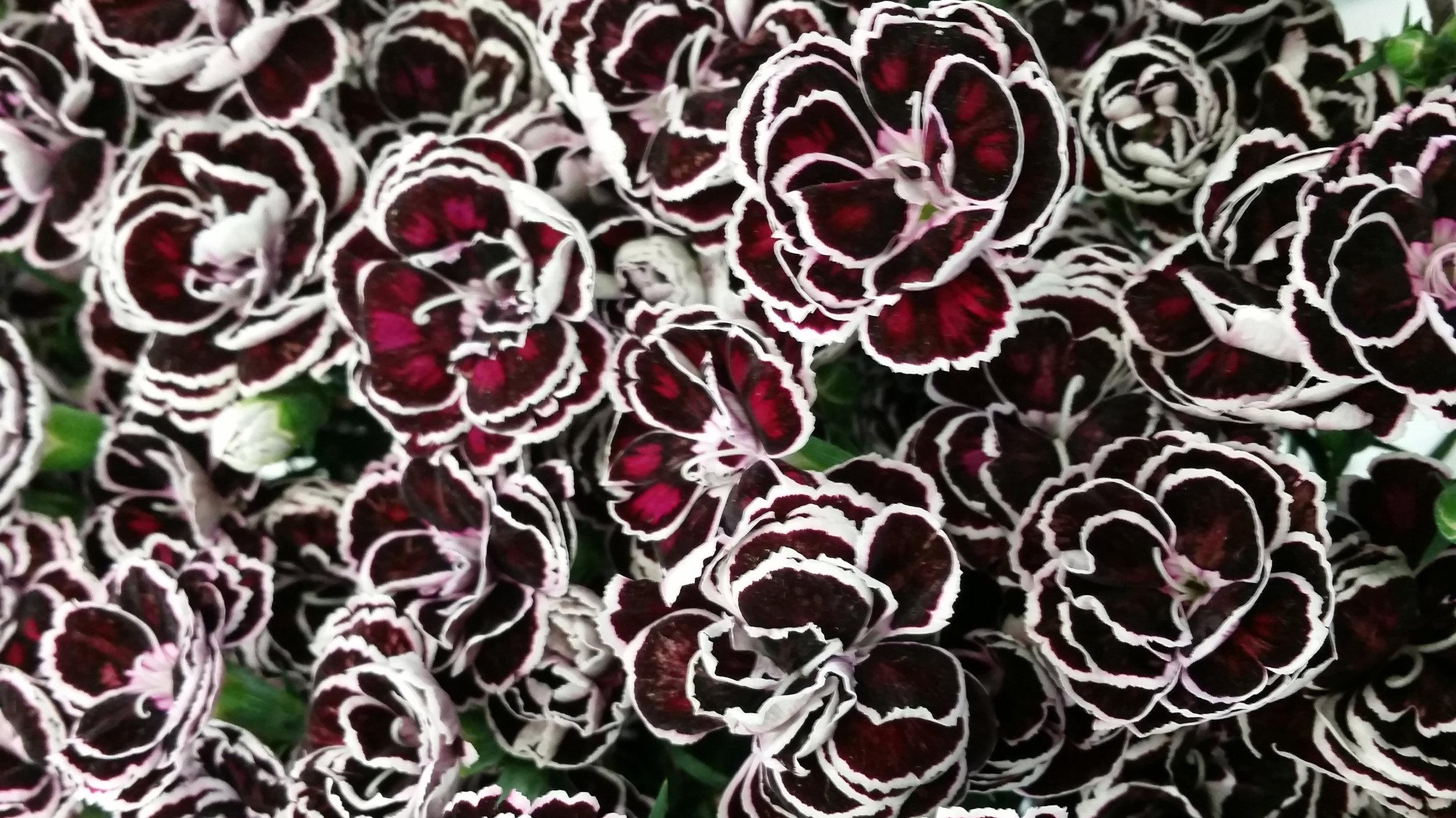 red_white_3.jpg