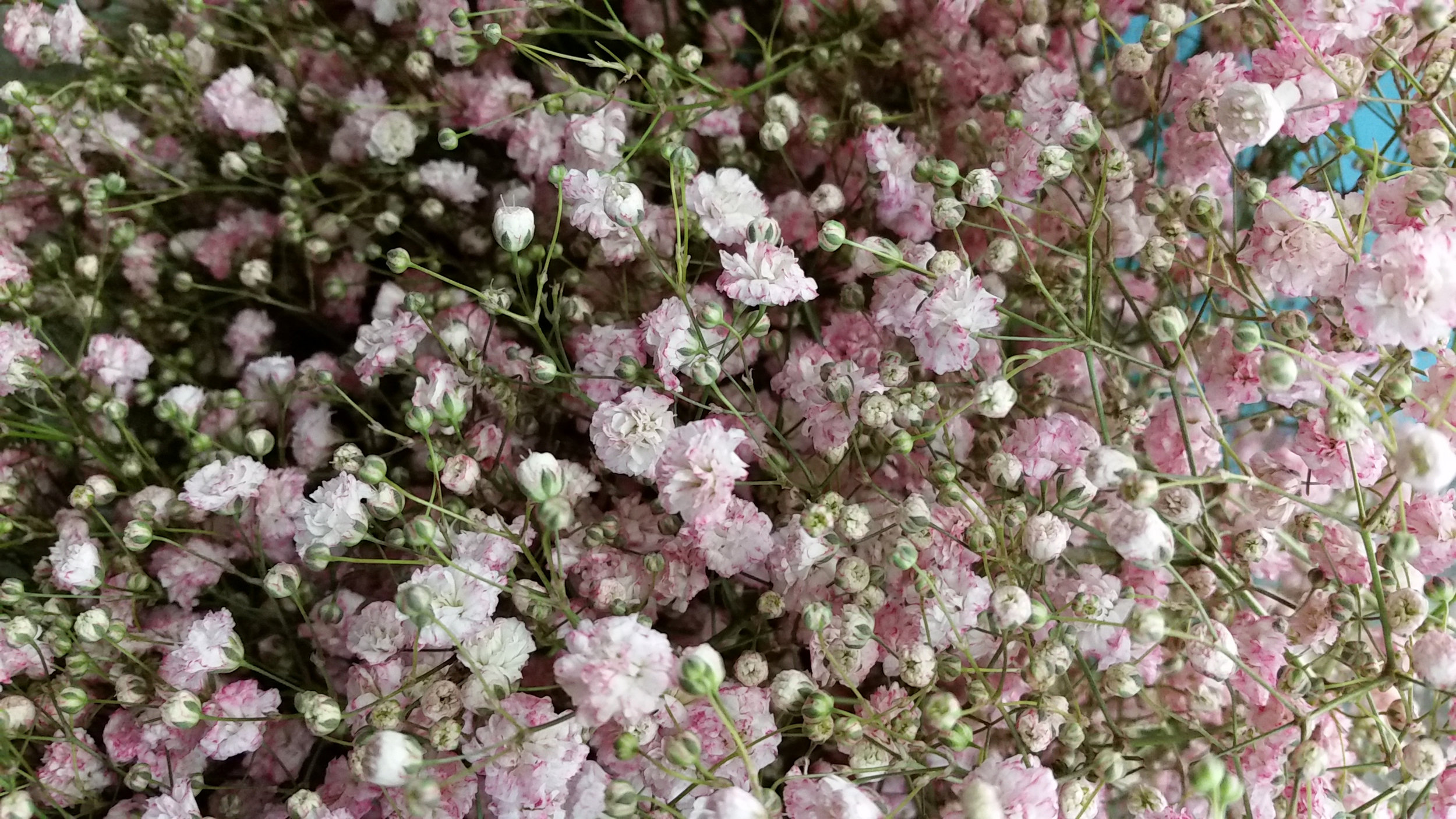 light_pink.jpg