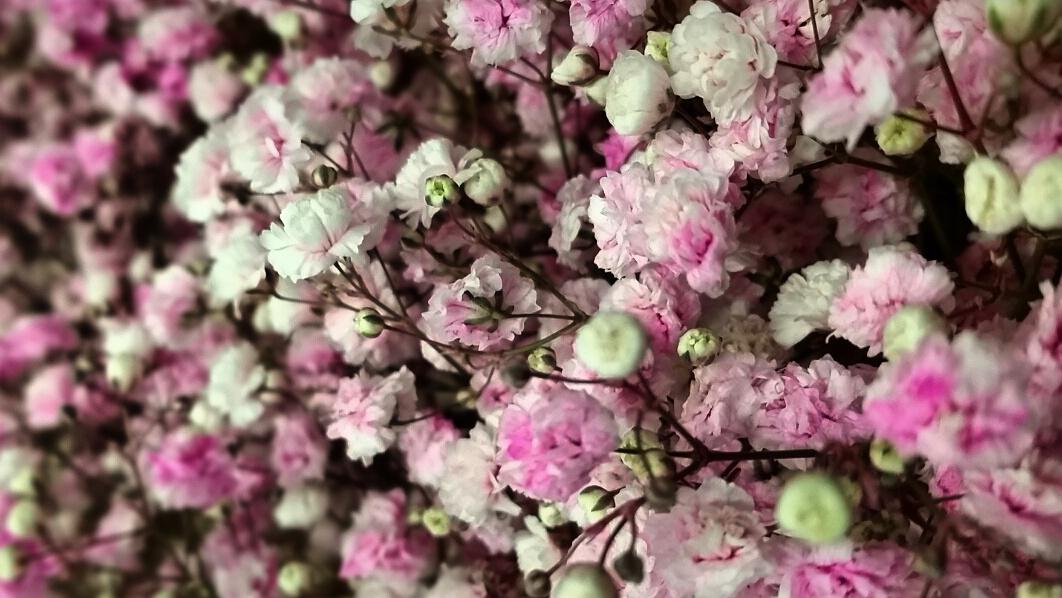 pink_white.jpg