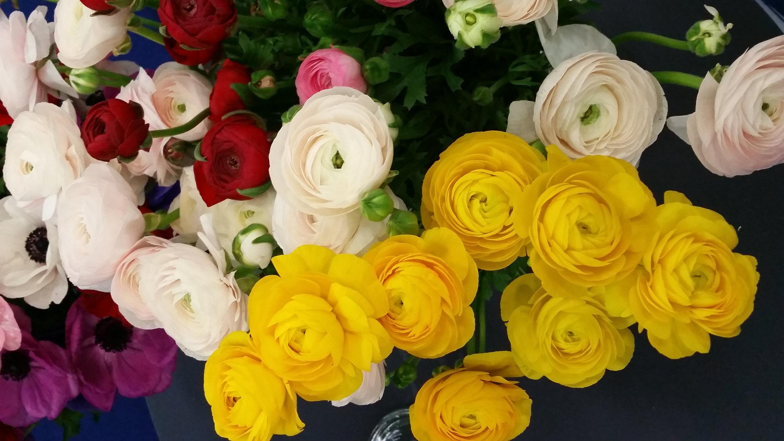 white_yellow_2.jpg