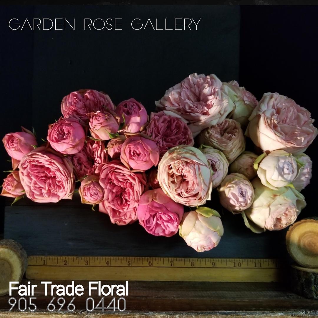 Garden Roses (2).jpg