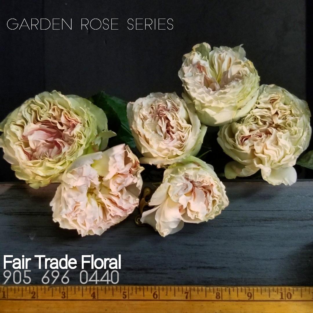 Garden Roses (3).jpg