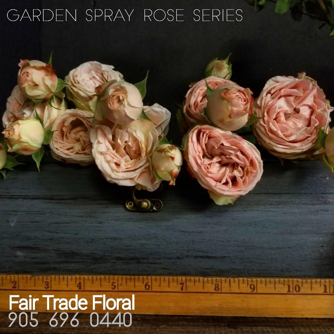 Garden Roses (4).jpg