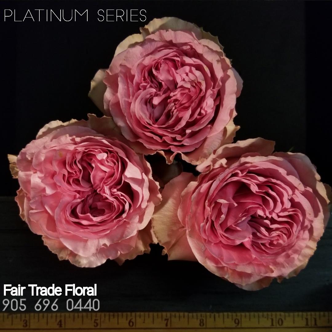 Garden Roses (17).jpg