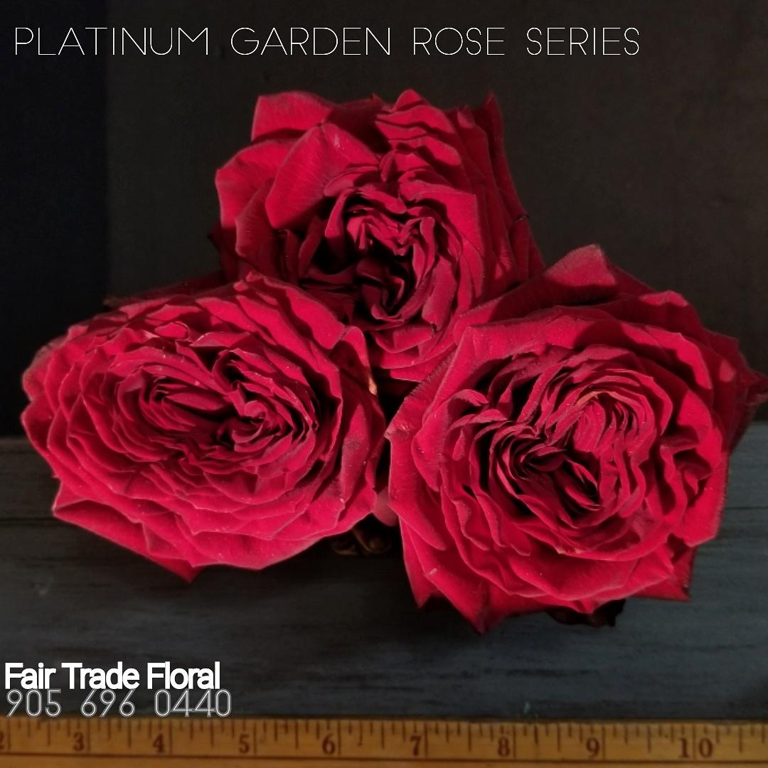 Garden Roses (19).jpg