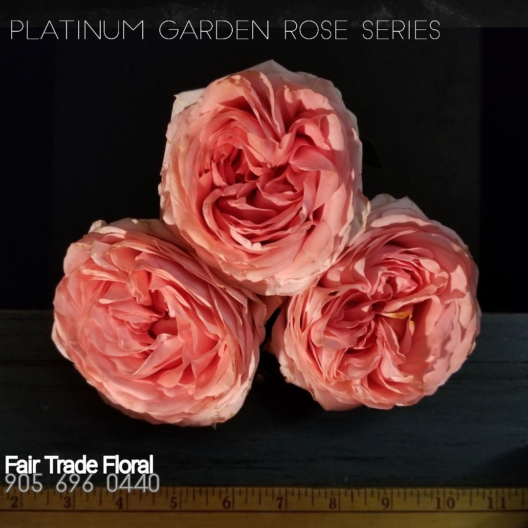 Garden Roses (20).jpg
