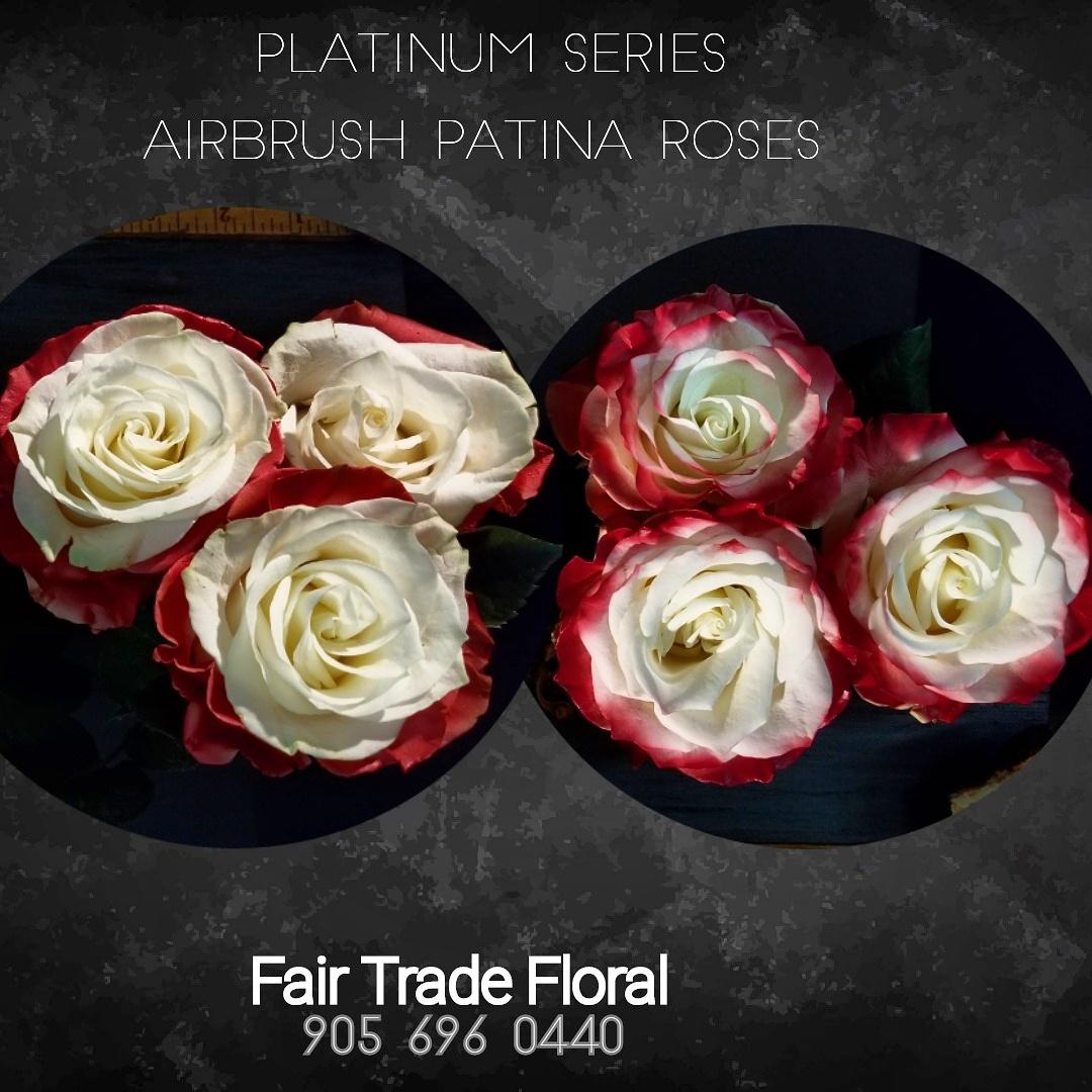 Painted Roses (2).jpg