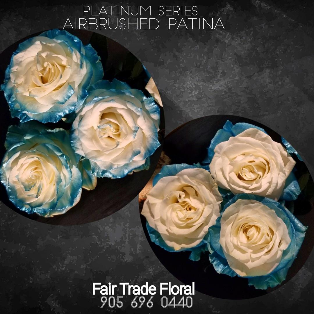 Painted Roses (4).jpg