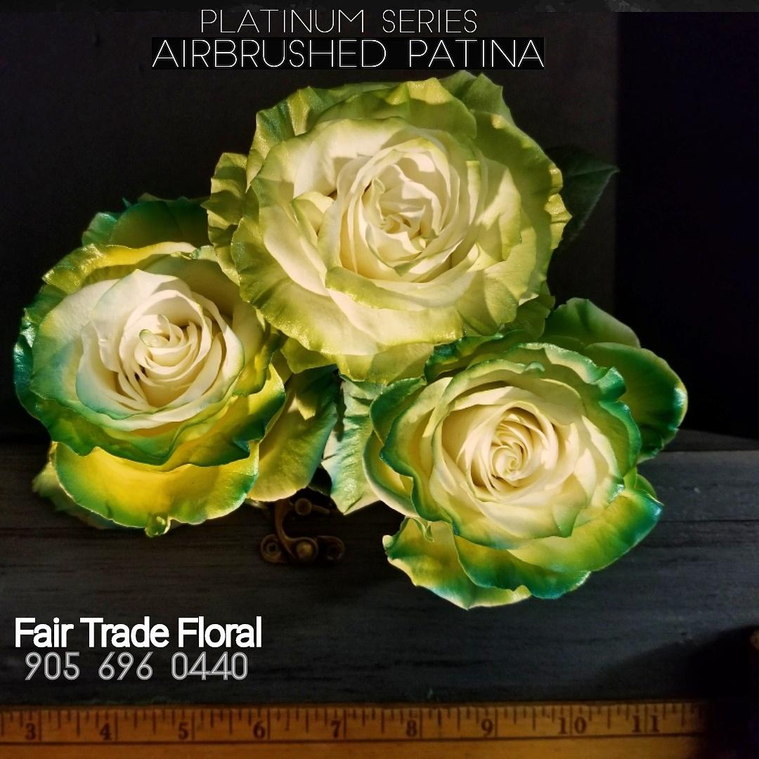 Painted Roses (6).jpg