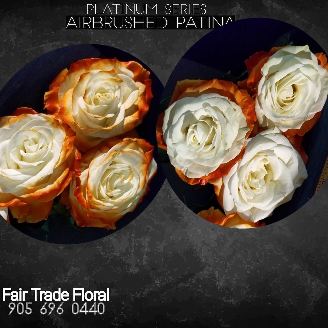 Painted Roses (8).jpg
