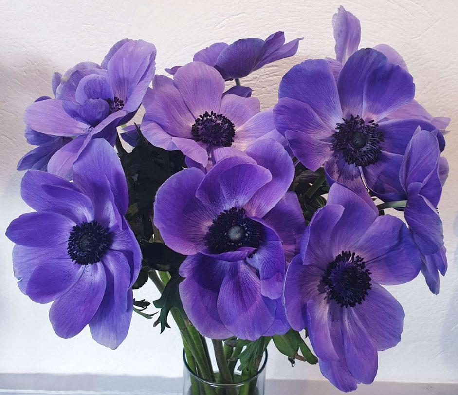 Anemone -