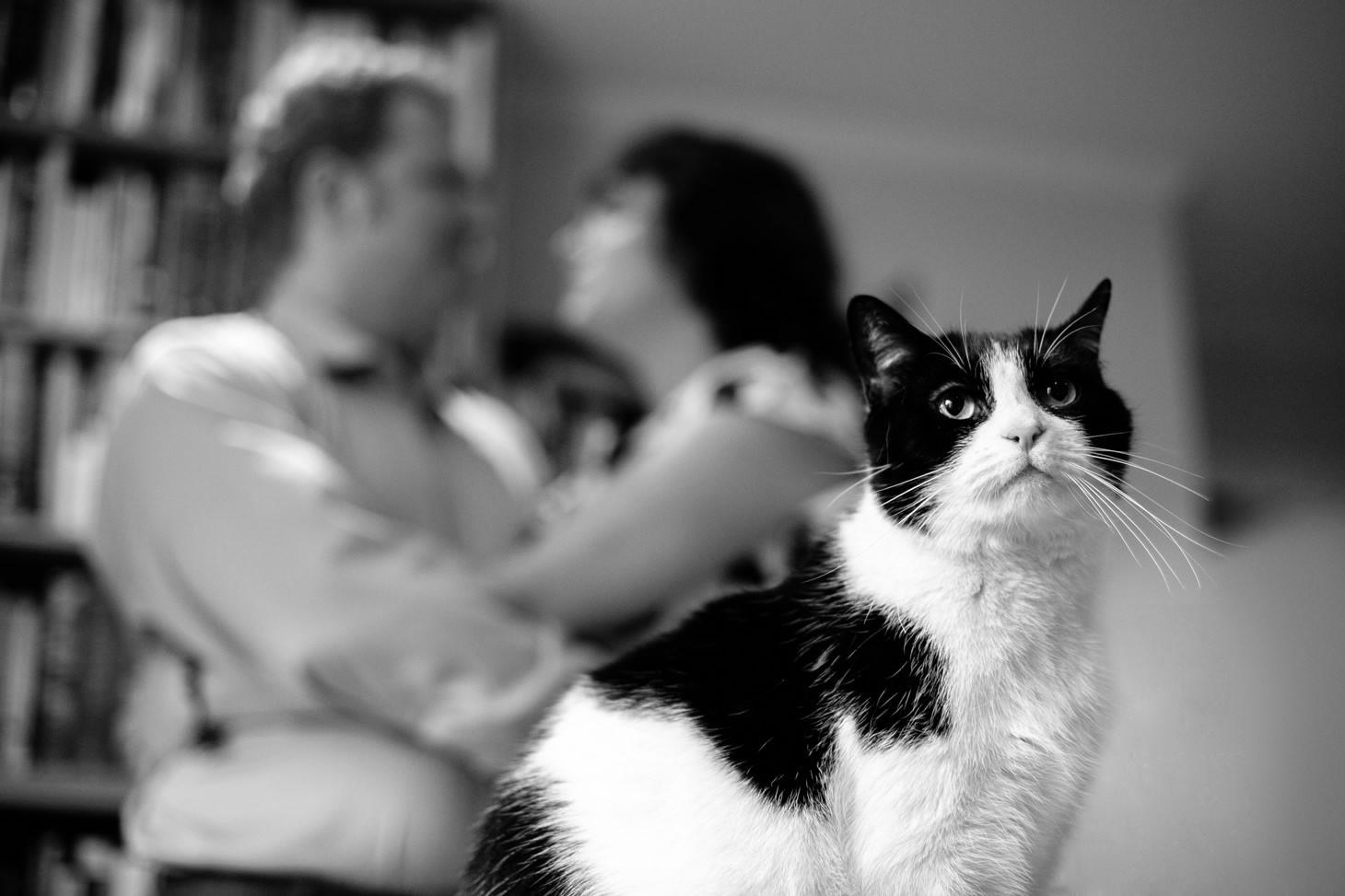 006-nyc-wedding-photographer-smitten-chickens-east-village-engagement-cats.jpg